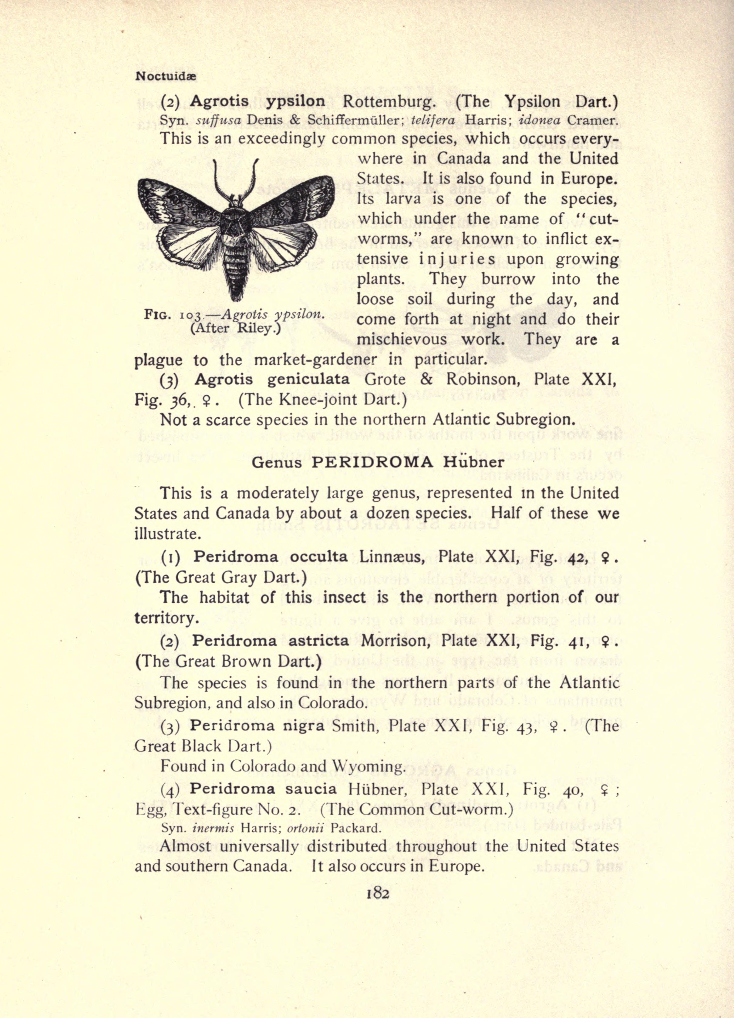 File:The moth book (Page 182, Fig. 103) BHL21853155.jpg - Wikimedia ...