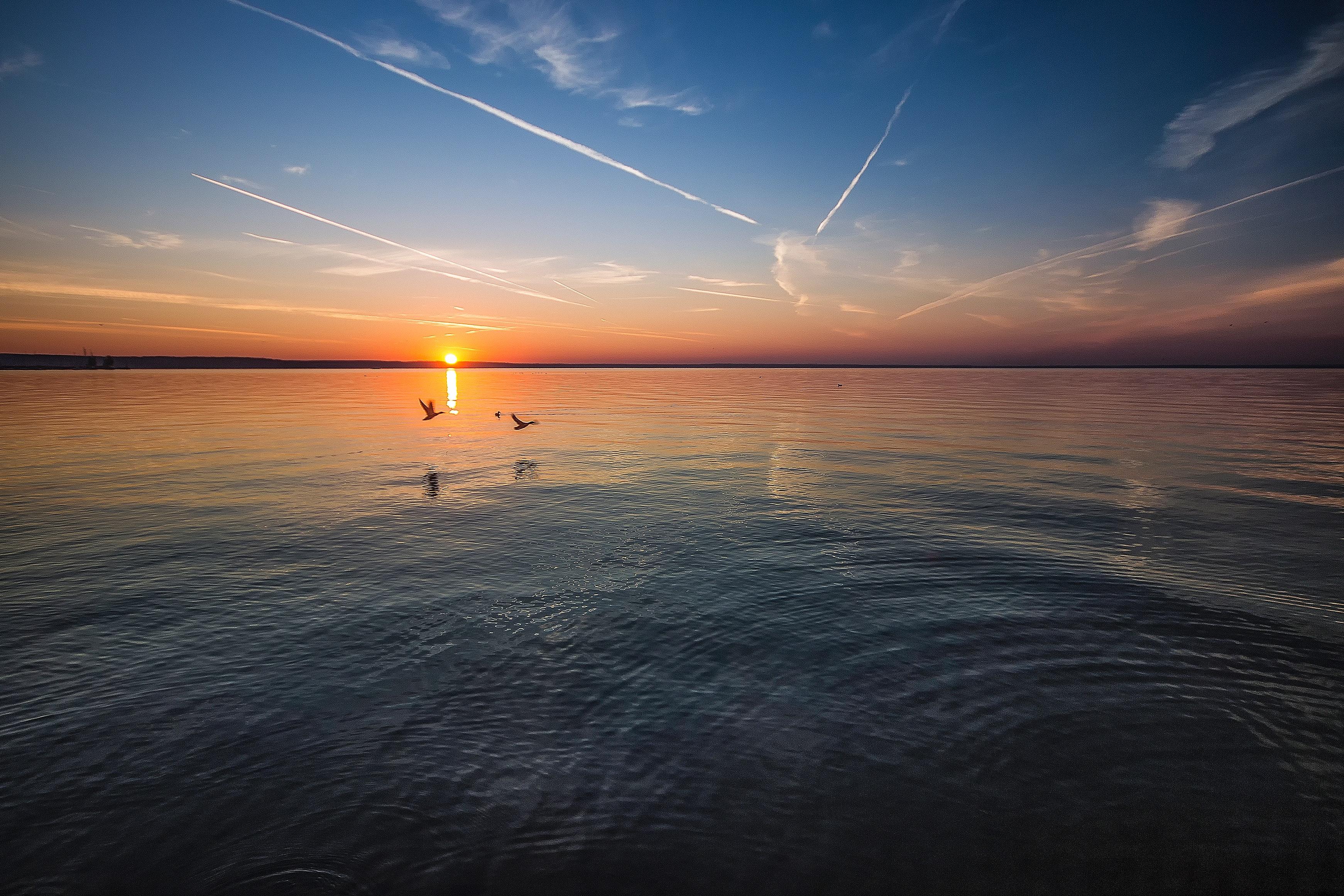 2 birds flying near body of water during orange sunset photo
