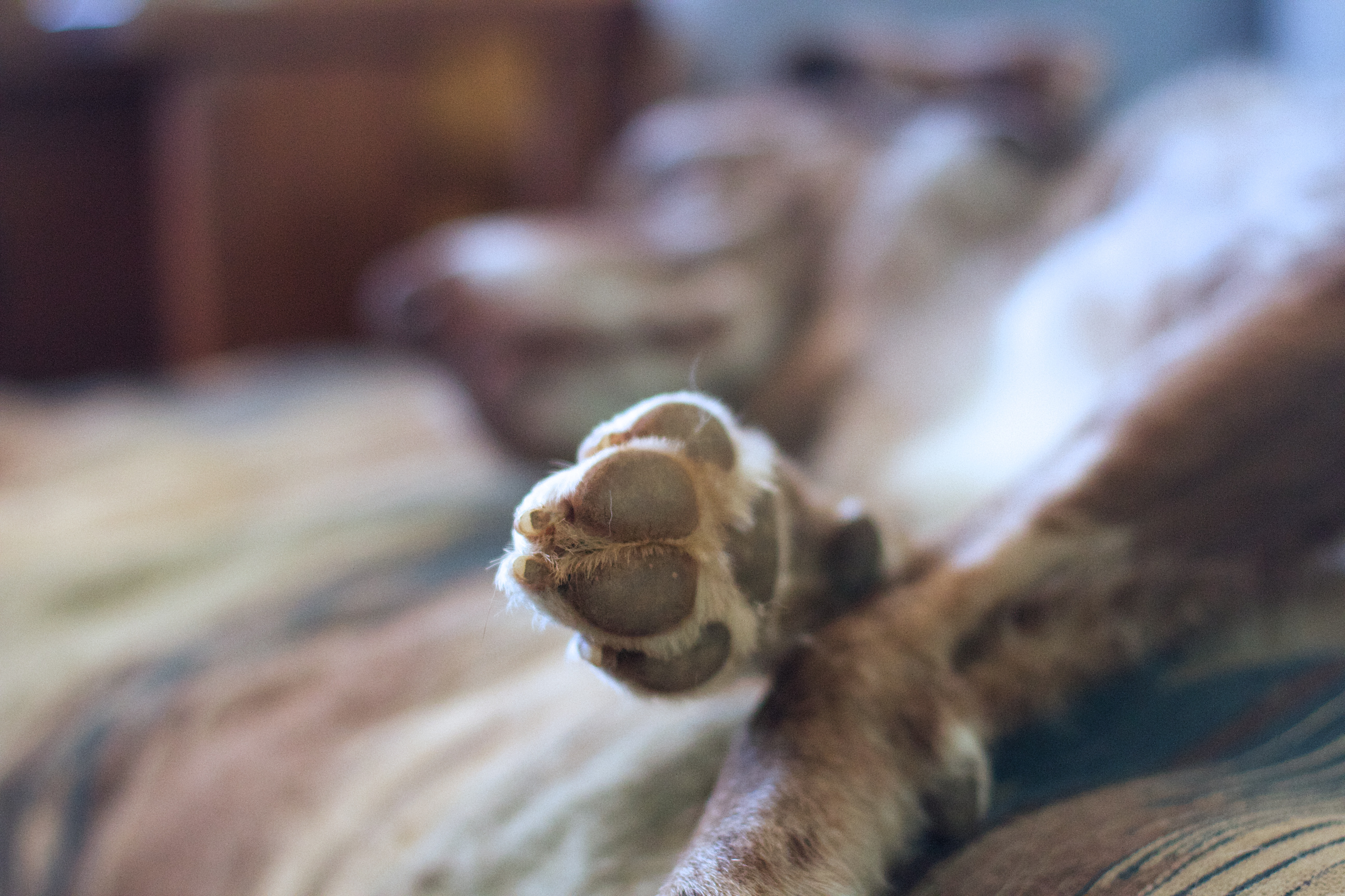 2018/365/49 talk to the paw! photo