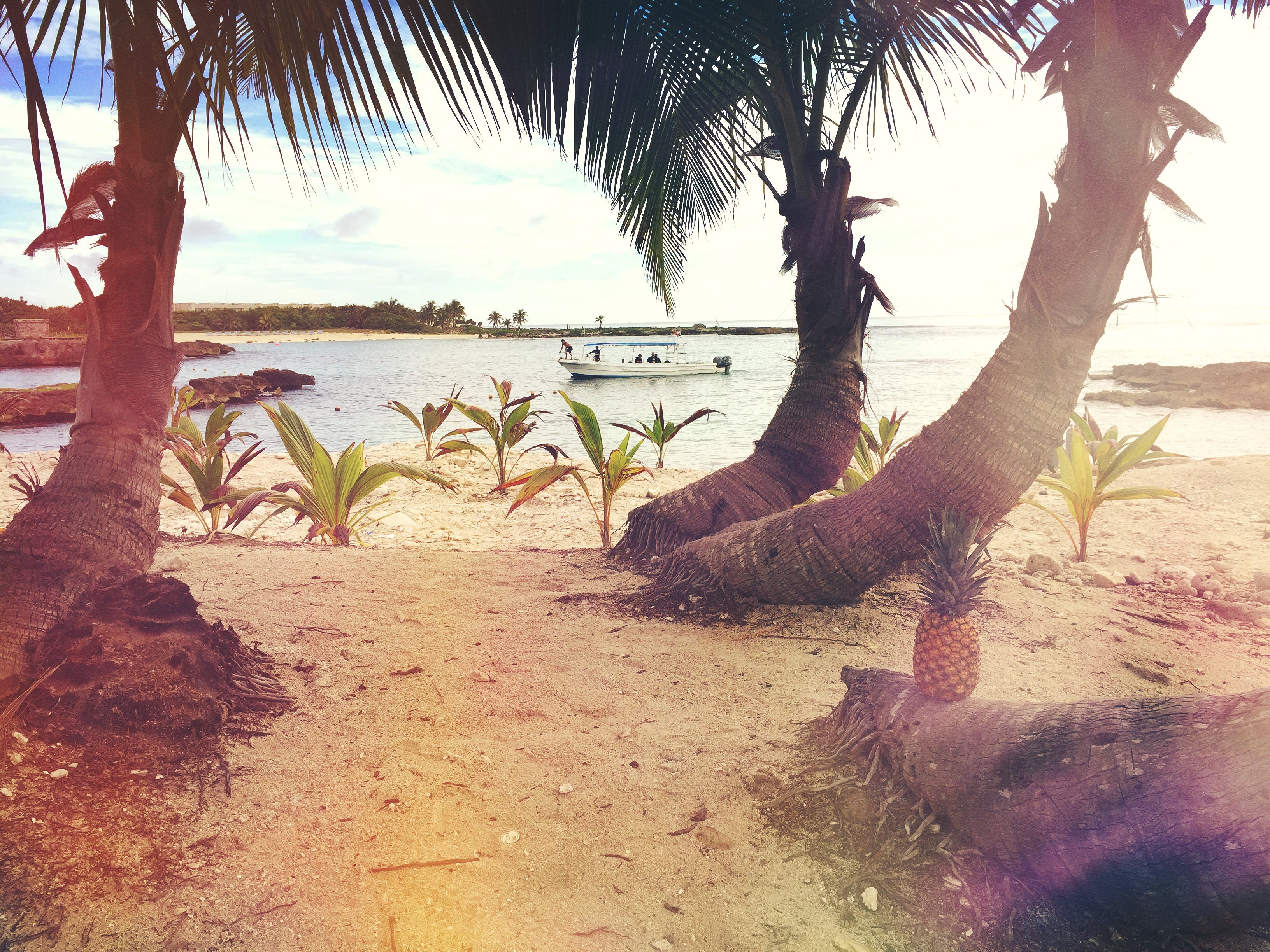 3 Coconut Trees Near the Beach Shore Line during Day Time, Beach, Resort, Vacation, Tropical, HQ Photo