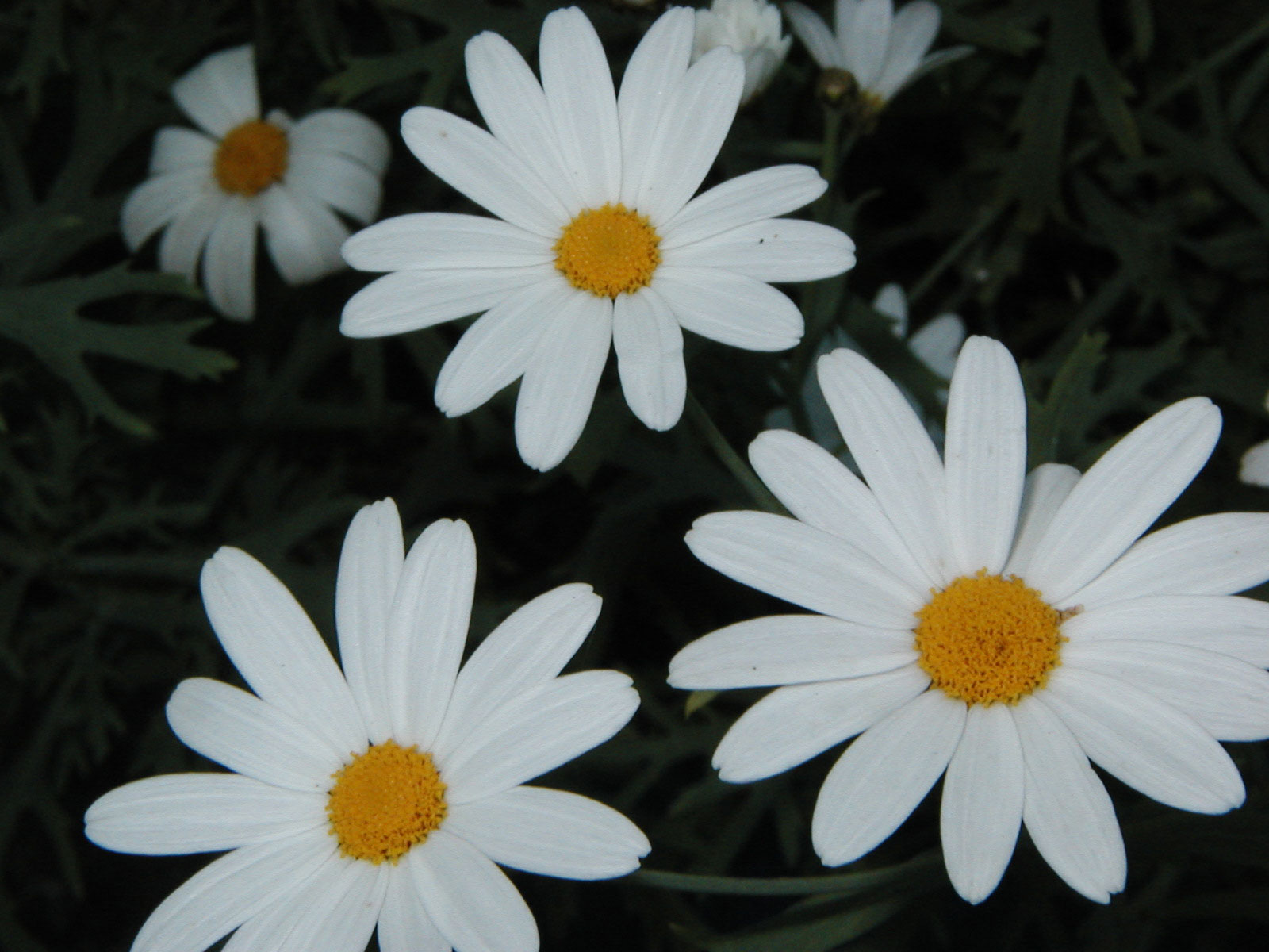 3 White flowers, Bloom, Flower, Orange, White, HQ Photo