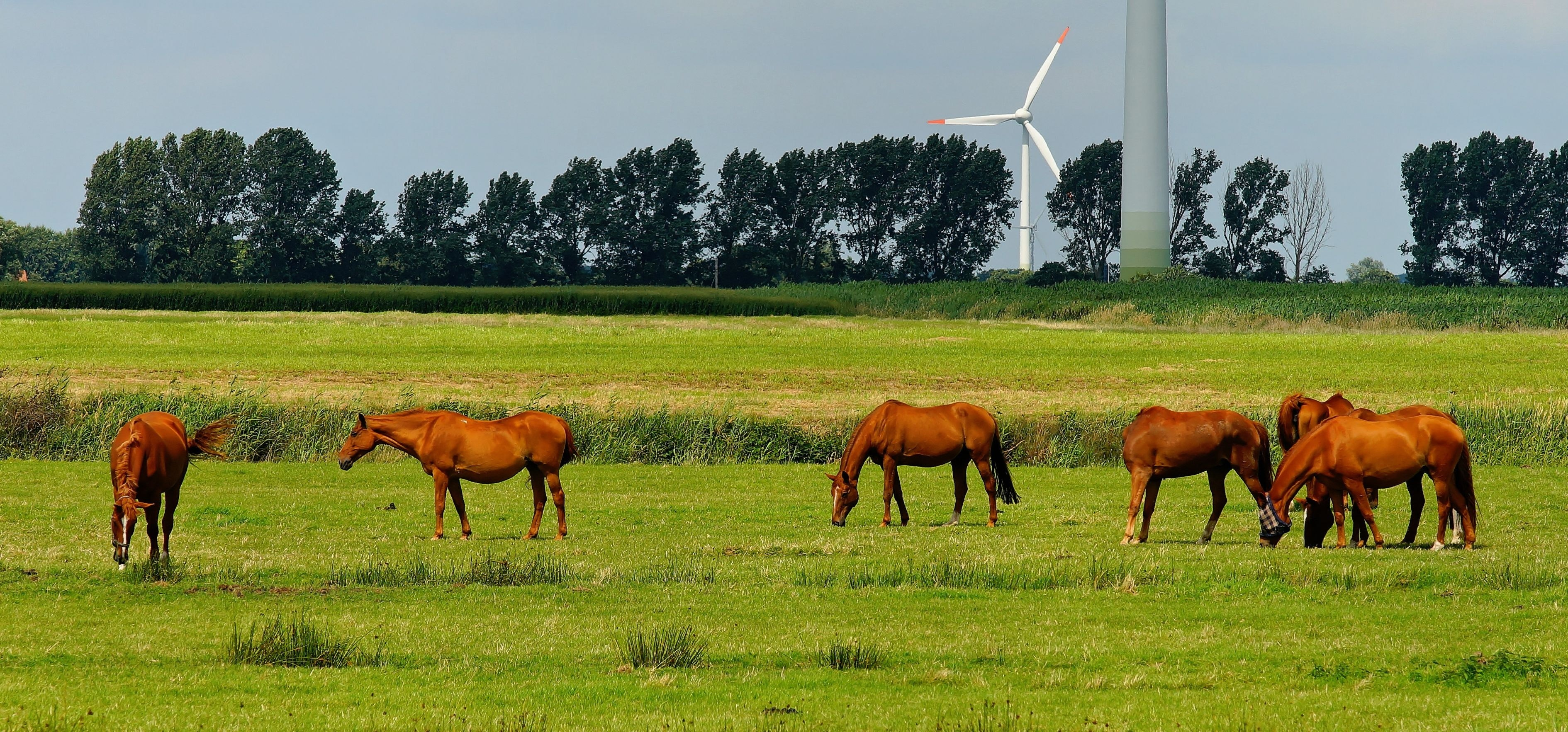 6 Horses on Green Field during Daytime, Animals, Equine, Farm, Field, HQ Photo