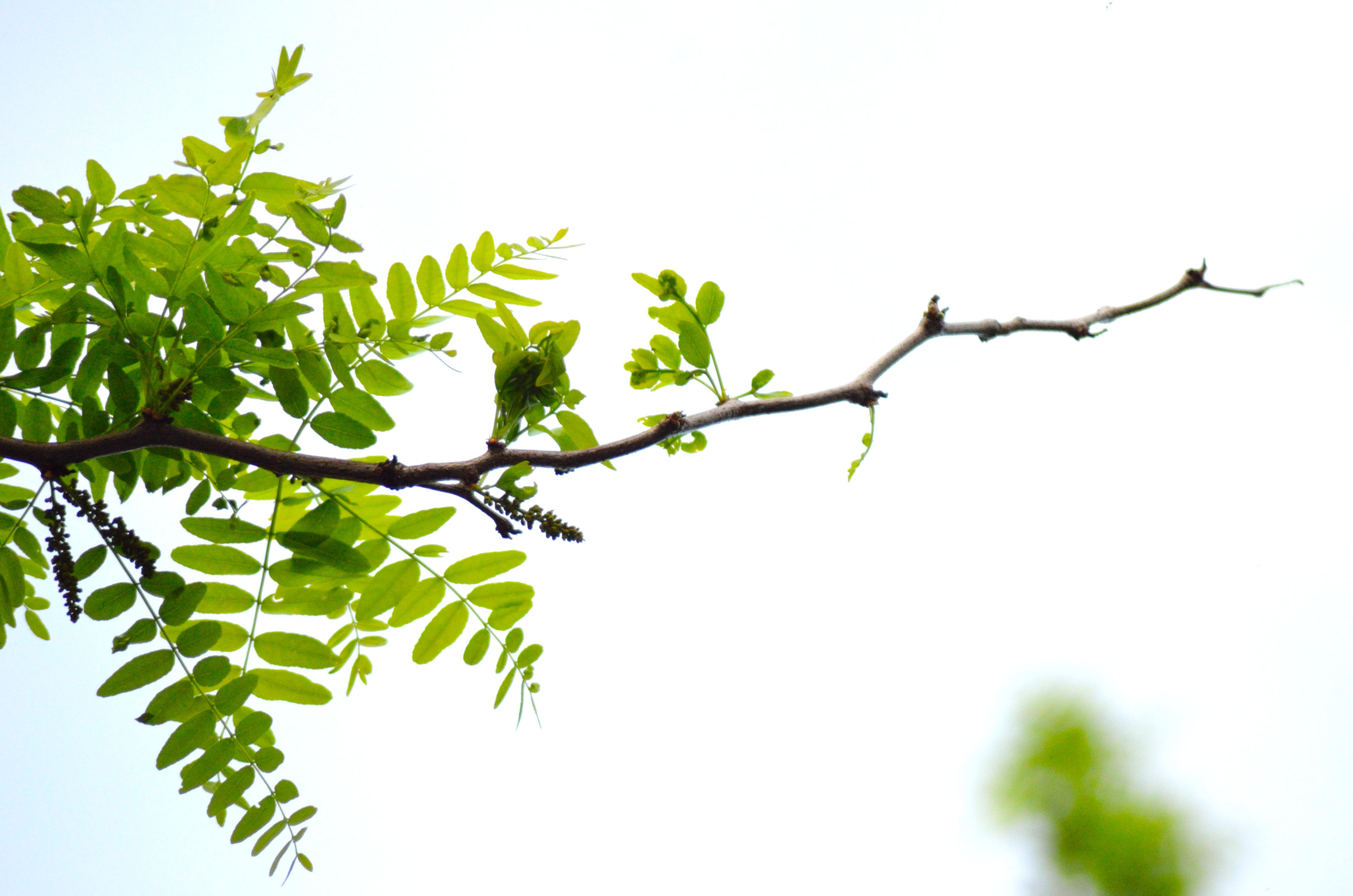Branch photo