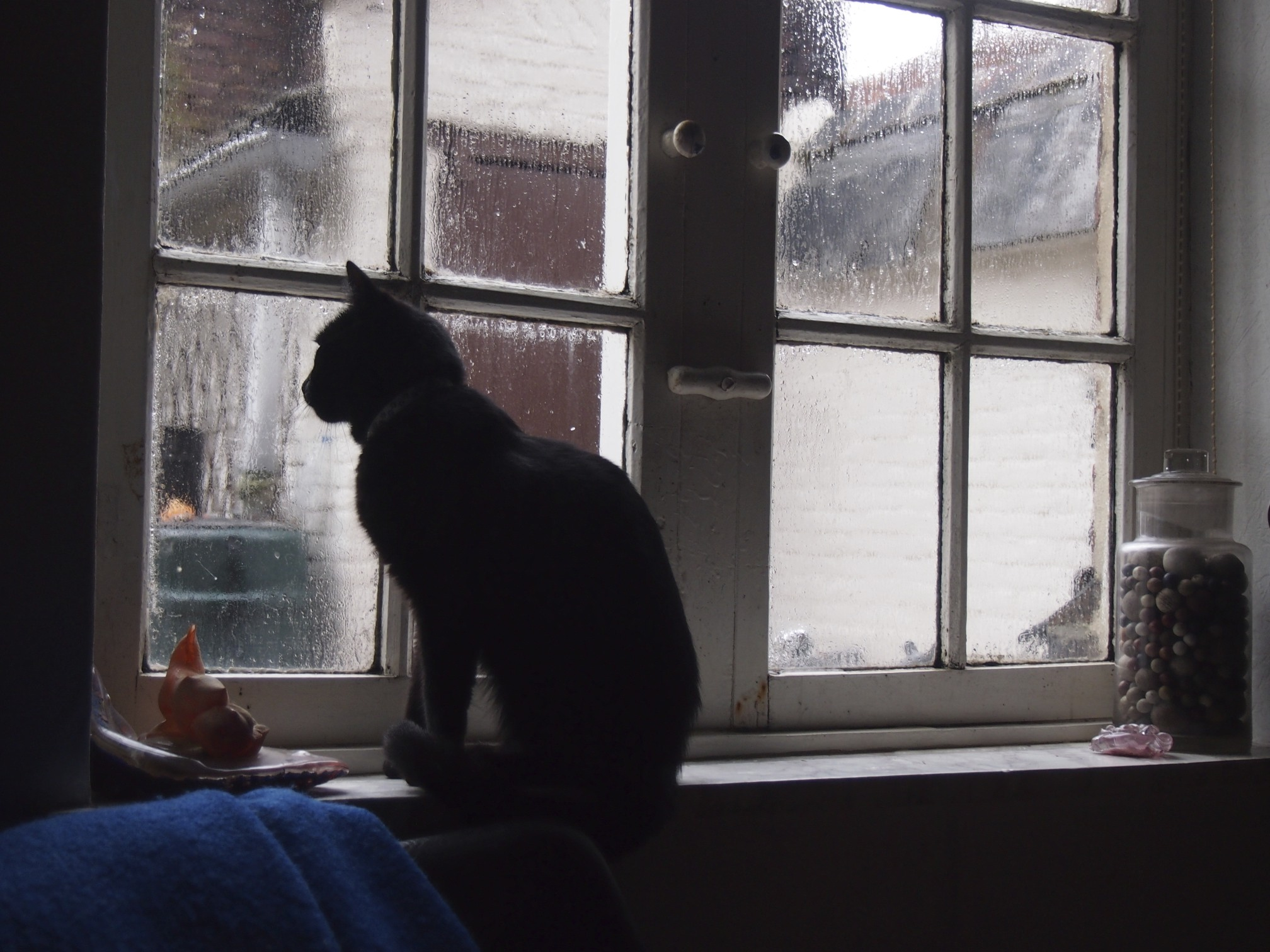 A cat by the window photo