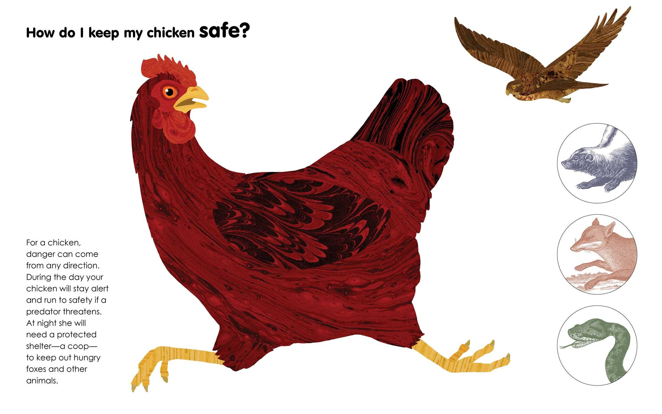 A Chicken Followed Me Home!: Questions and Answers about a Familiar ...