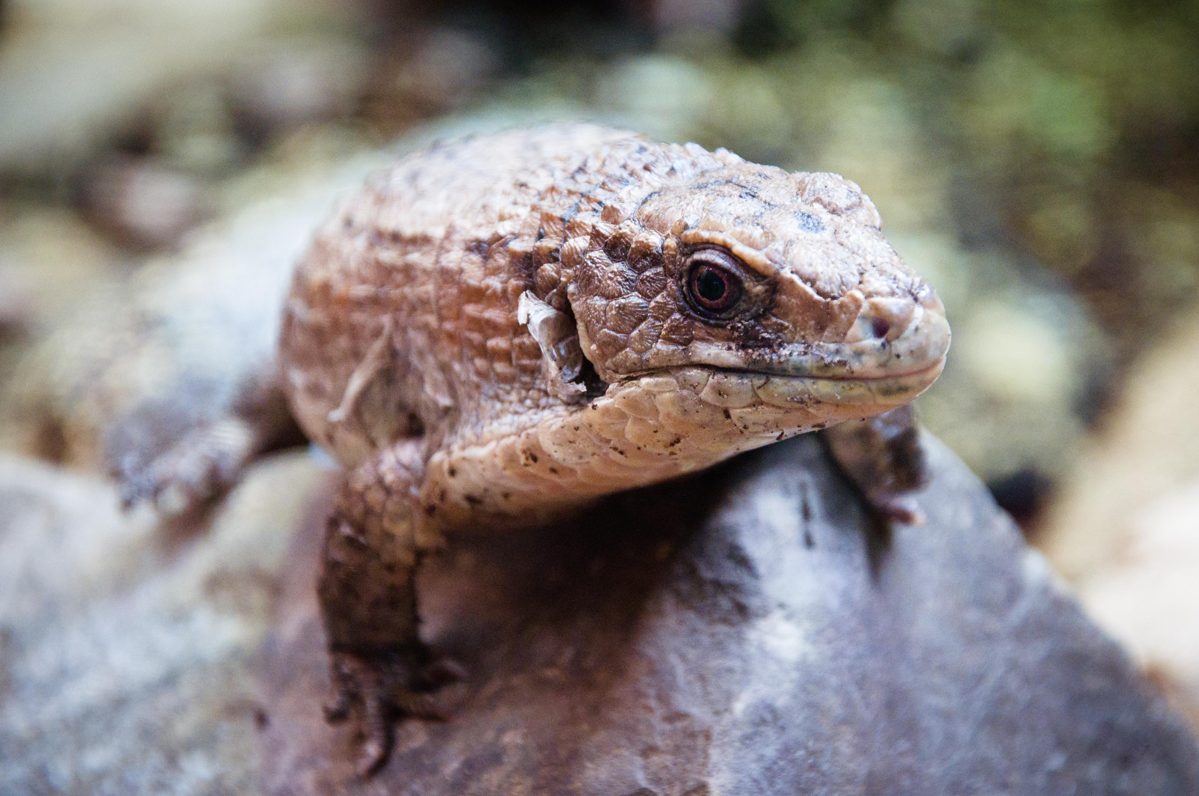 A close up of a lizard photo