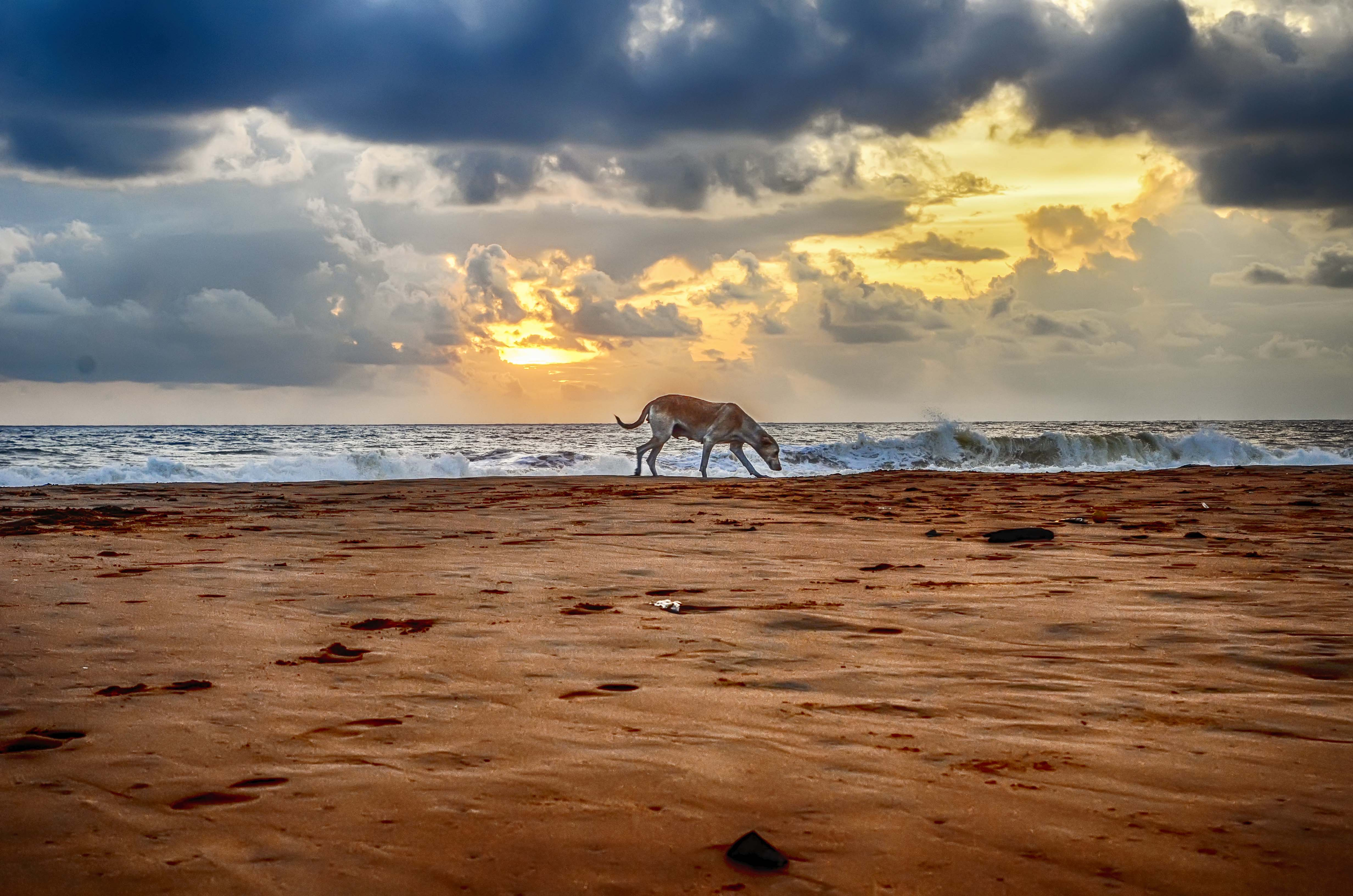A cloudy sunset with alone dog, Alone, Animal, Cloudy, Dog, HQ Photo