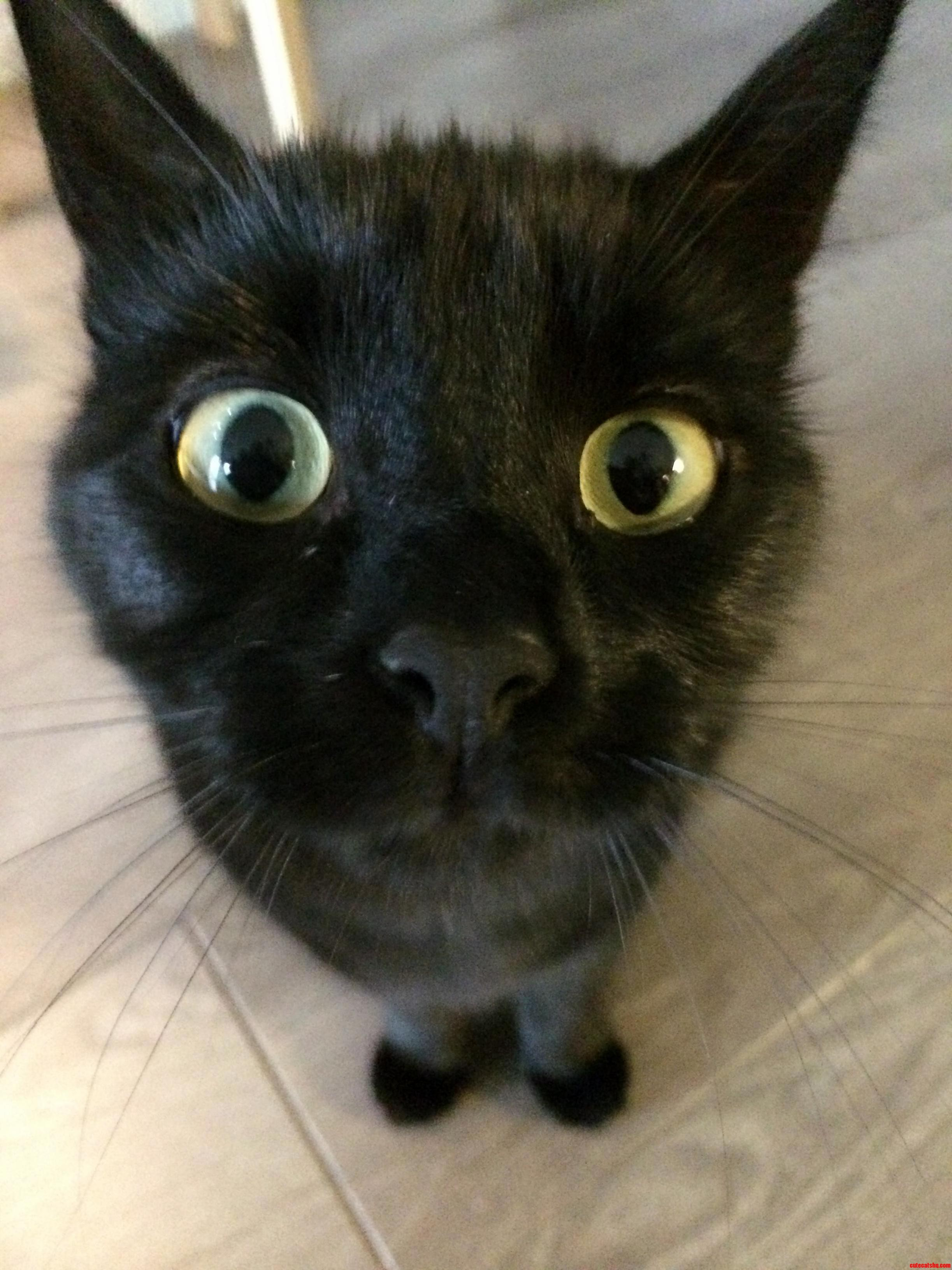 Sandy Is A Curious Cat | Cute cats HQ - Pictures of cute cats and ...