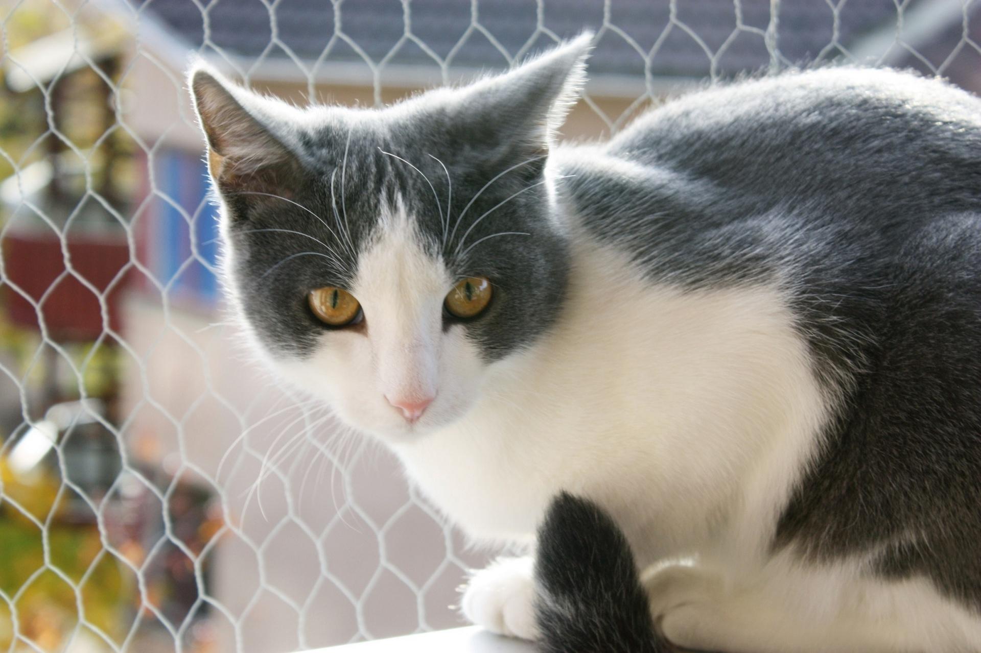 Portrait Of A Curious Cat Free Stock Photo - Public Domain Pictures