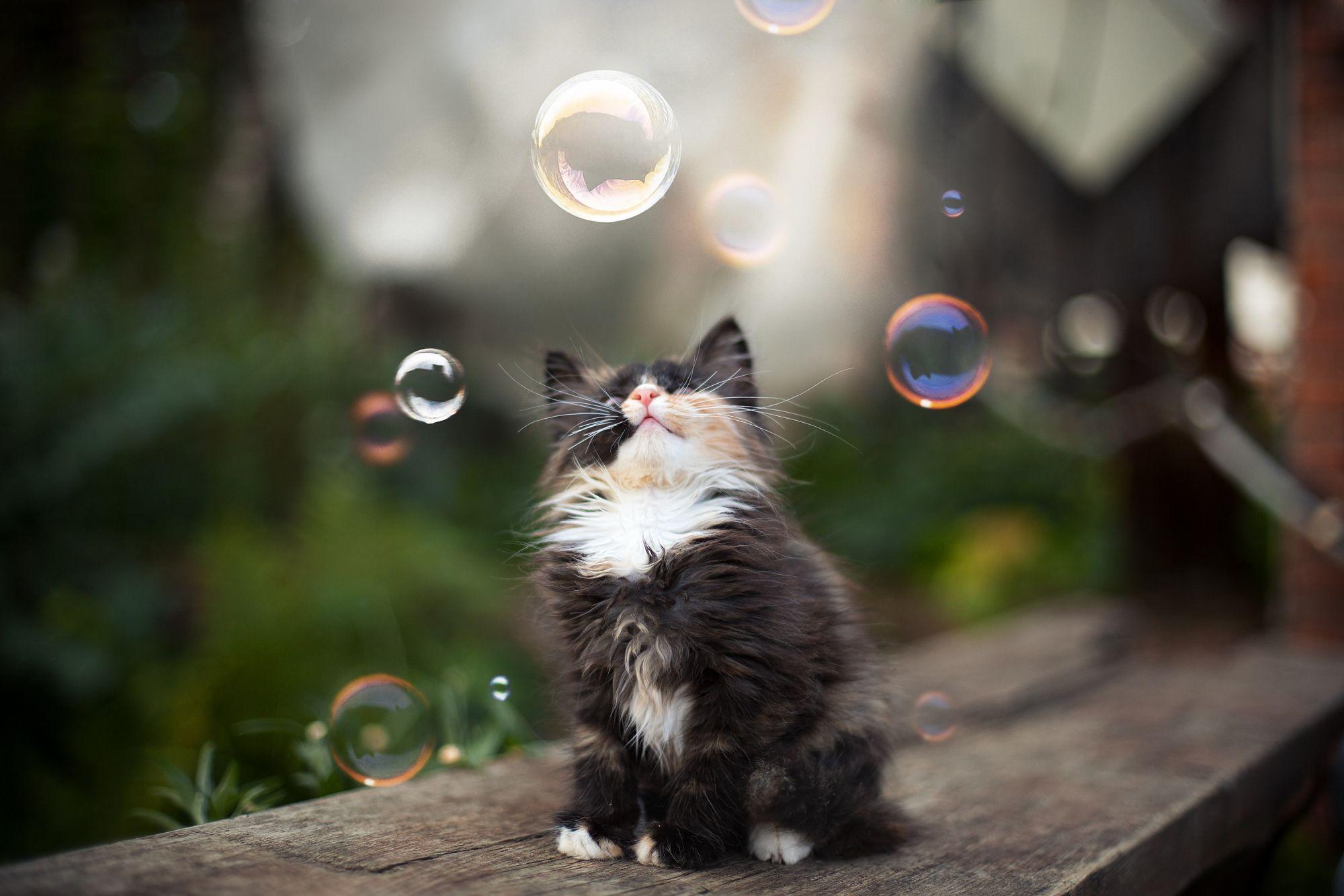 Curious Cat | Cat Lovers