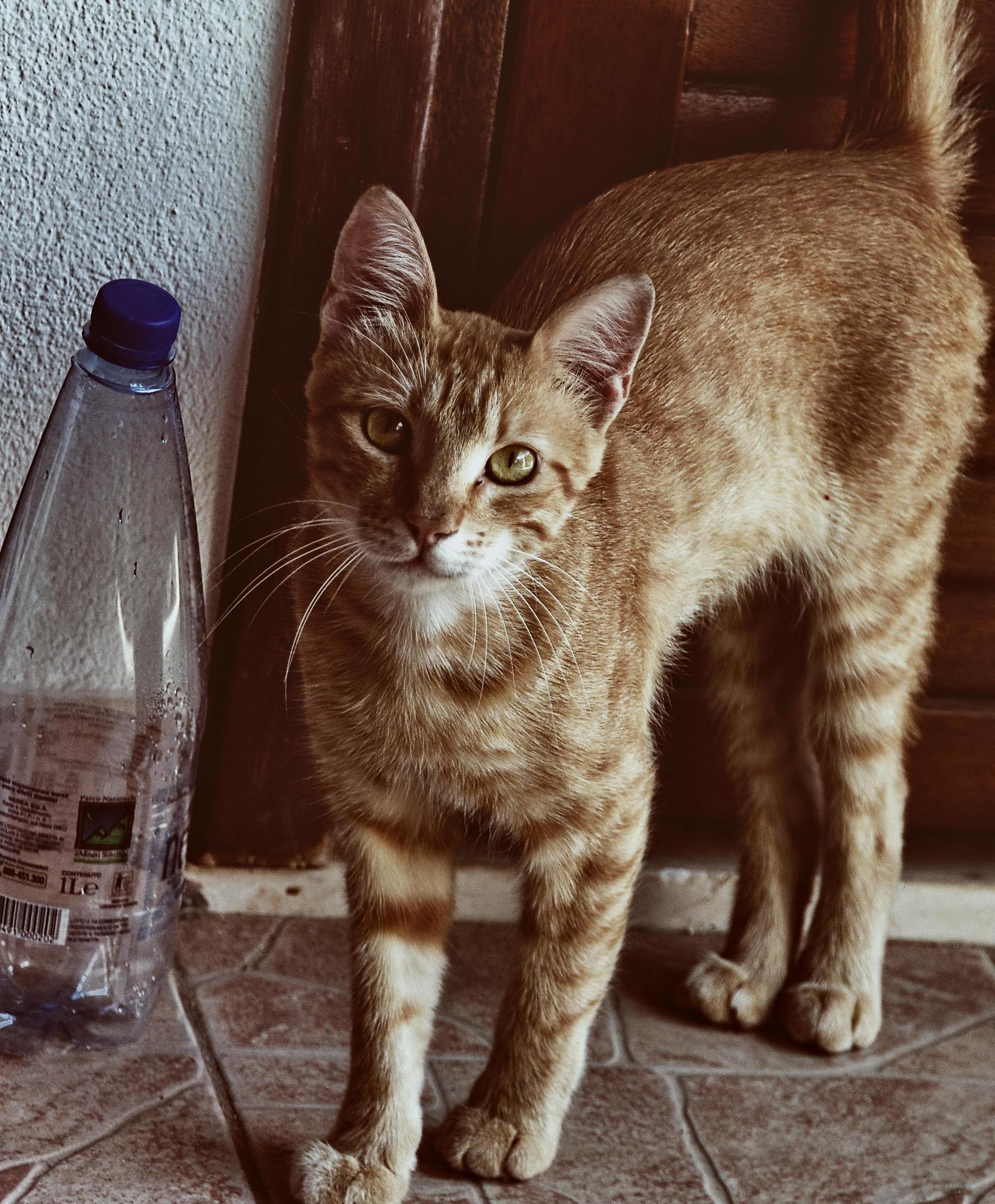 Foap.com: portrait of a curious cat stock photo by colors