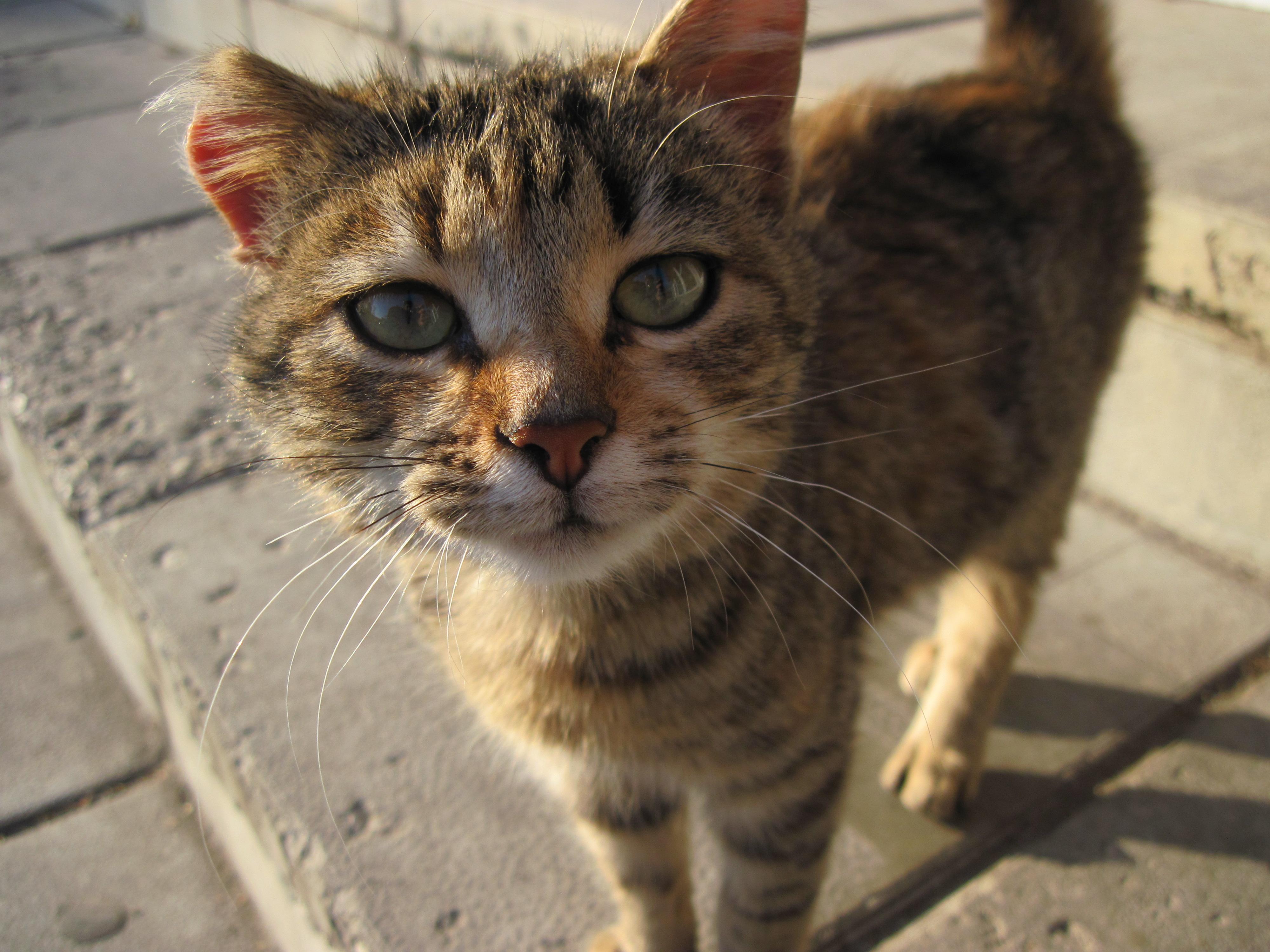 A curious cat, Animal, Cat, Close, Curious, HQ Photo