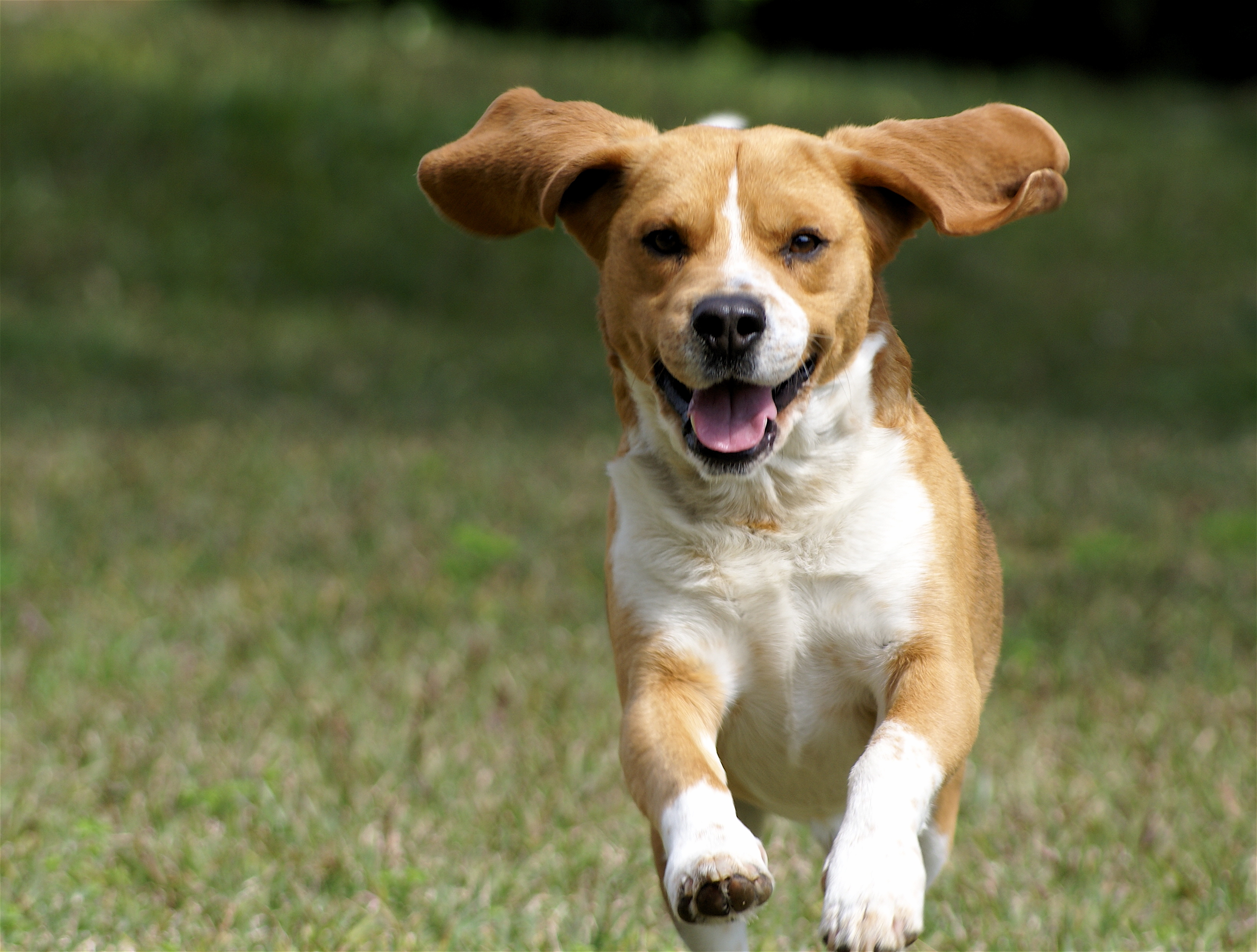9 reasons to own a dog - Business Insider