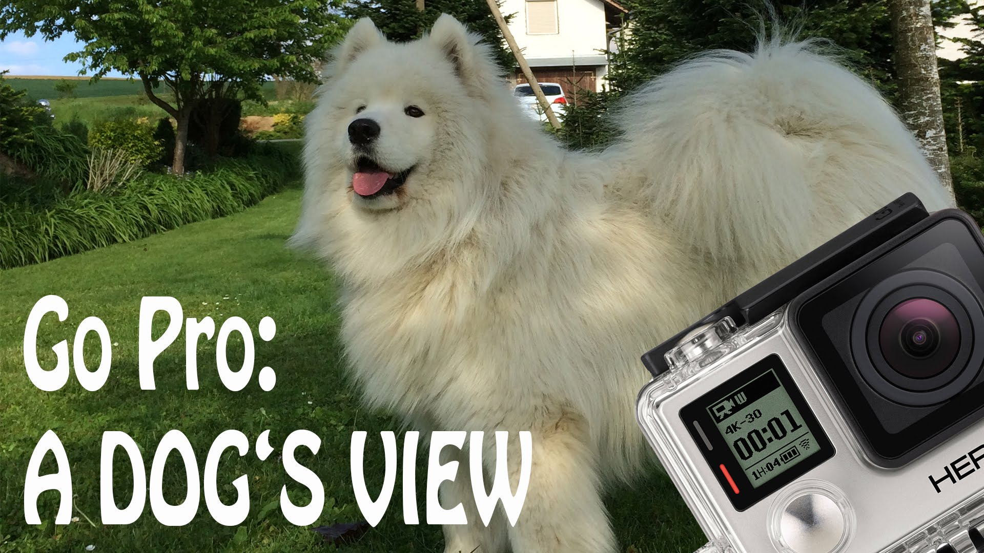 A dogs view photo