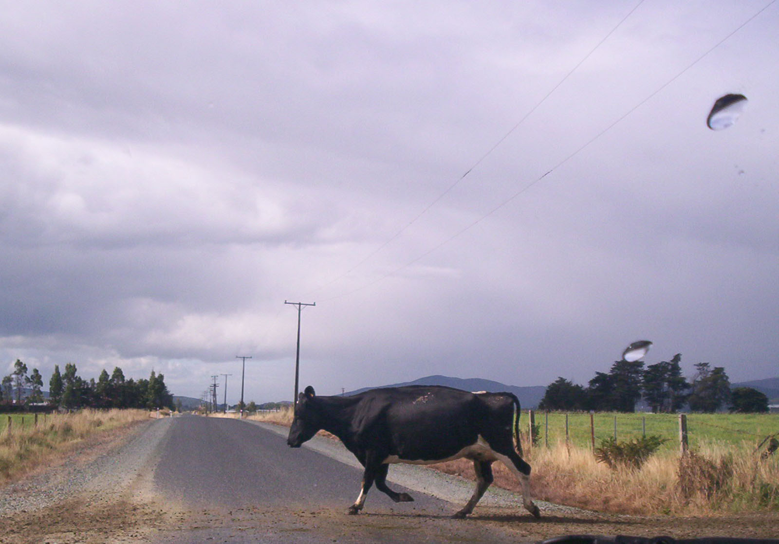 A Friesian Cow..., Bspo06, Clouds, Front, In, HQ Photo