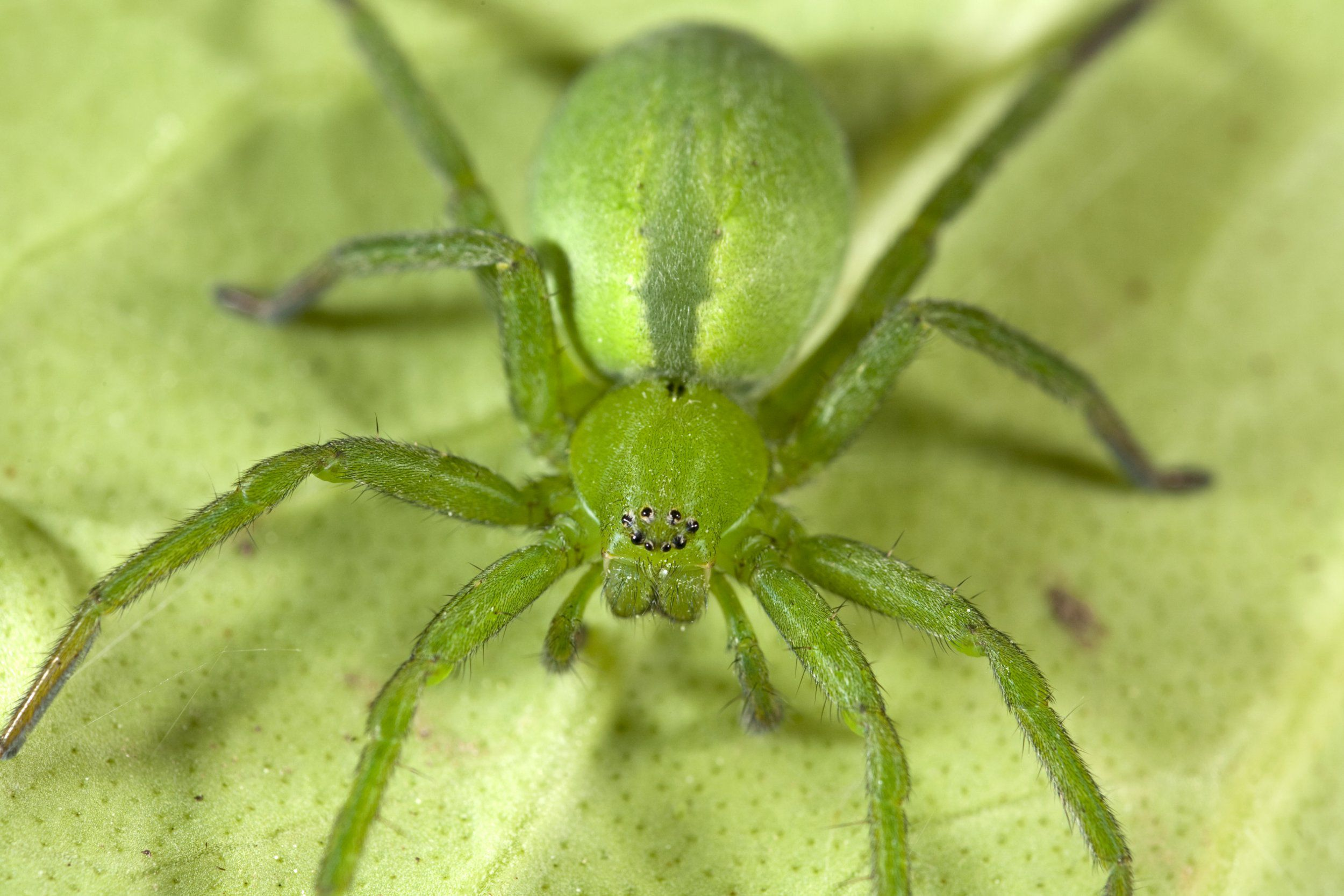 A green spider photo