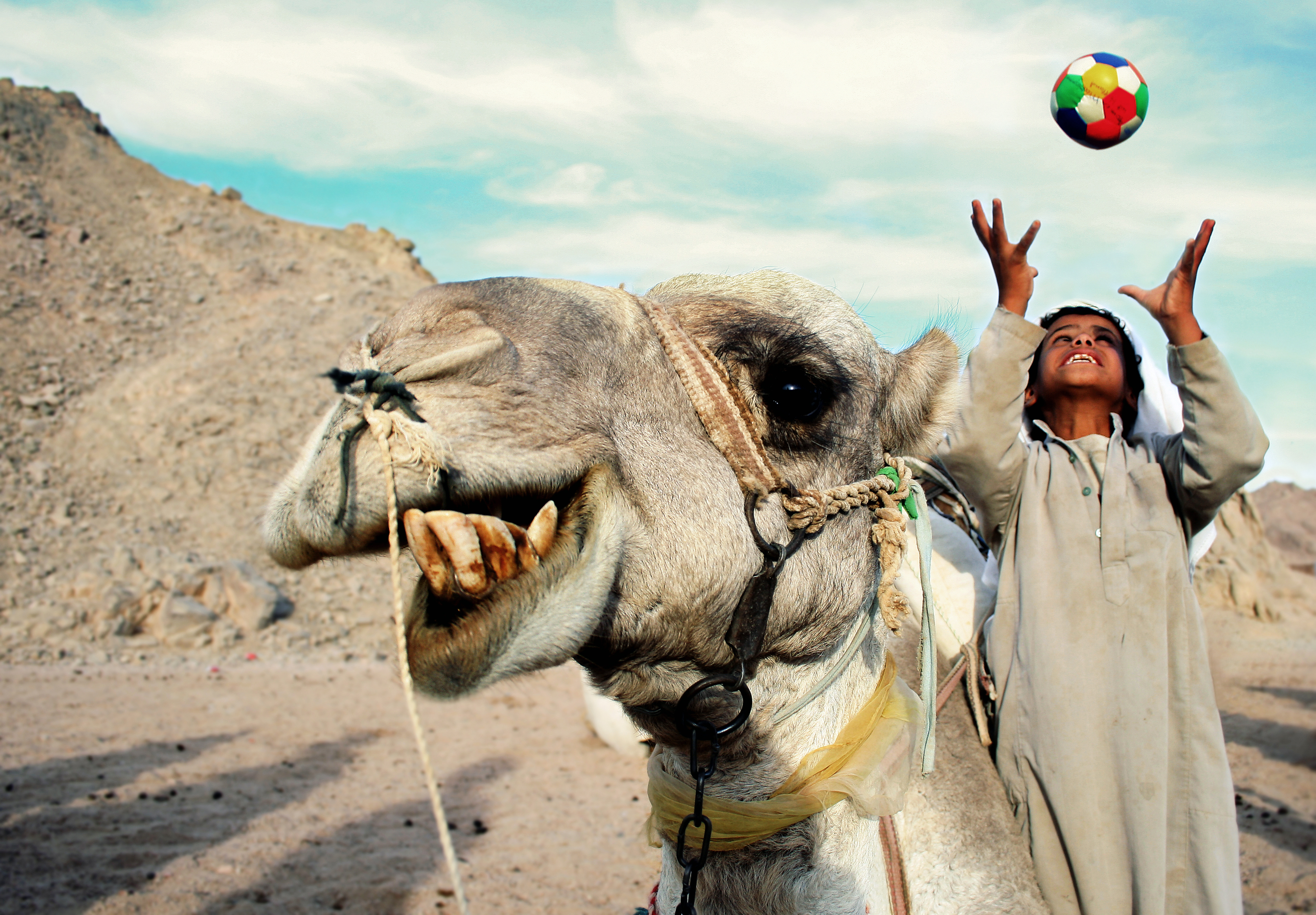 A happy camel and boy photo