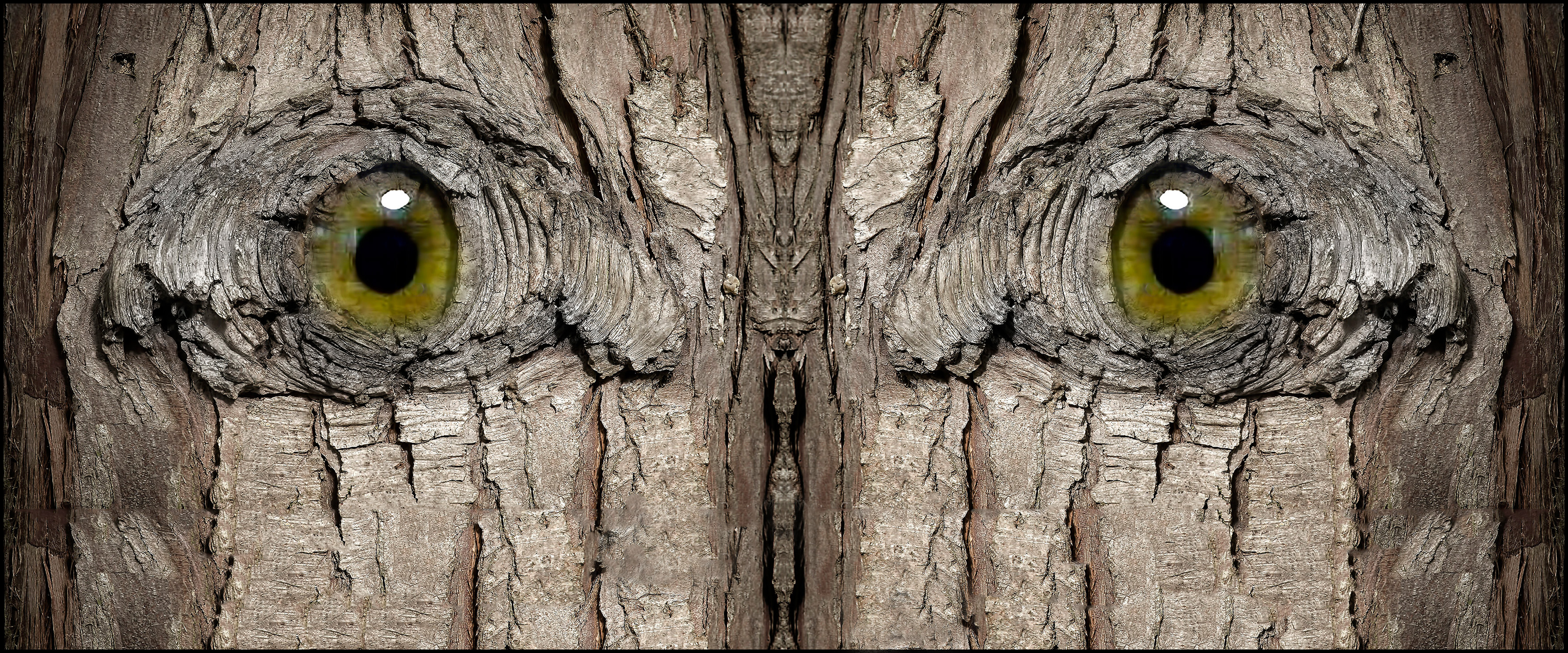 Once Upon A Knothole… |