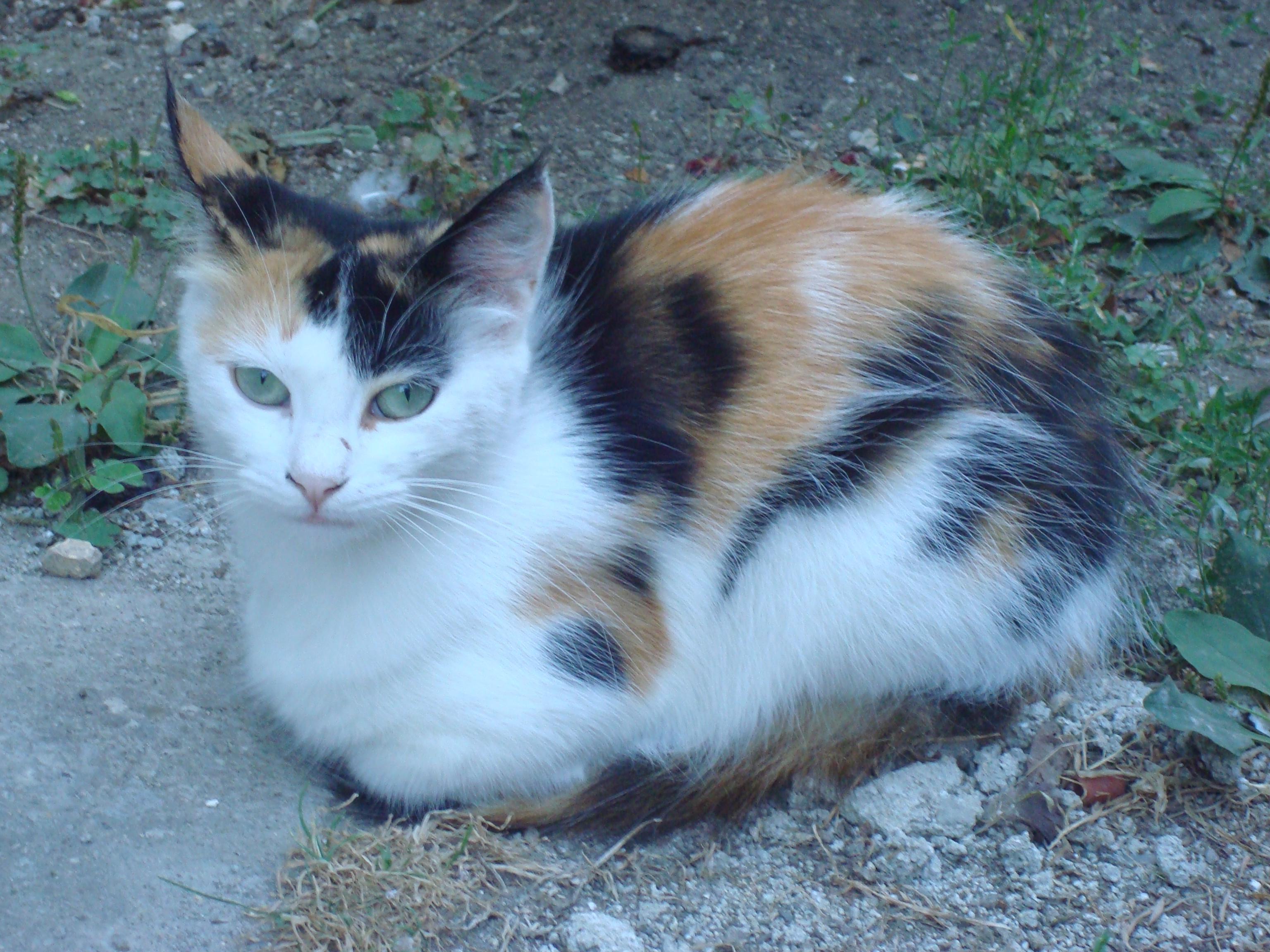 A little resting kitten photo