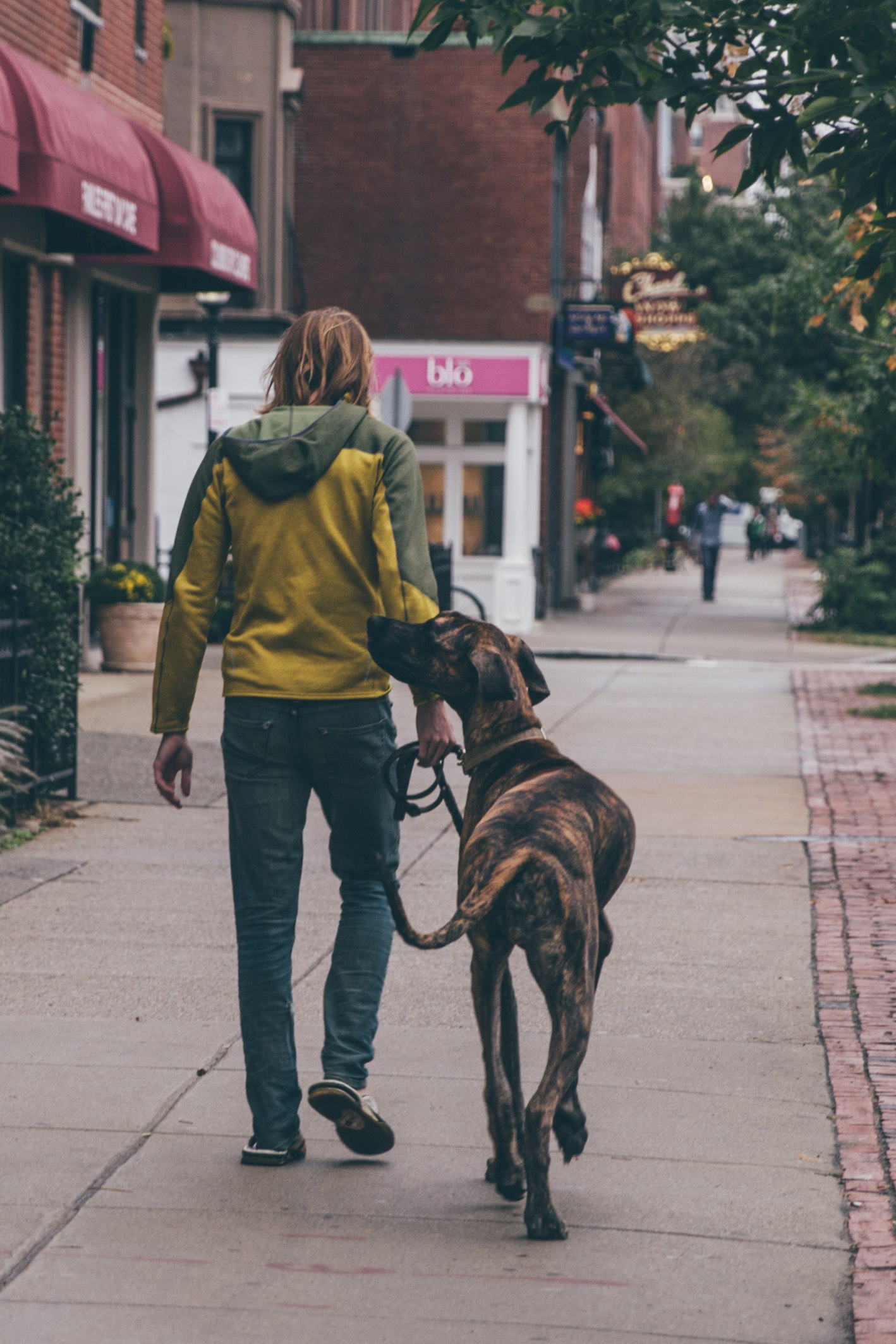A man walking in the street with his dog photo