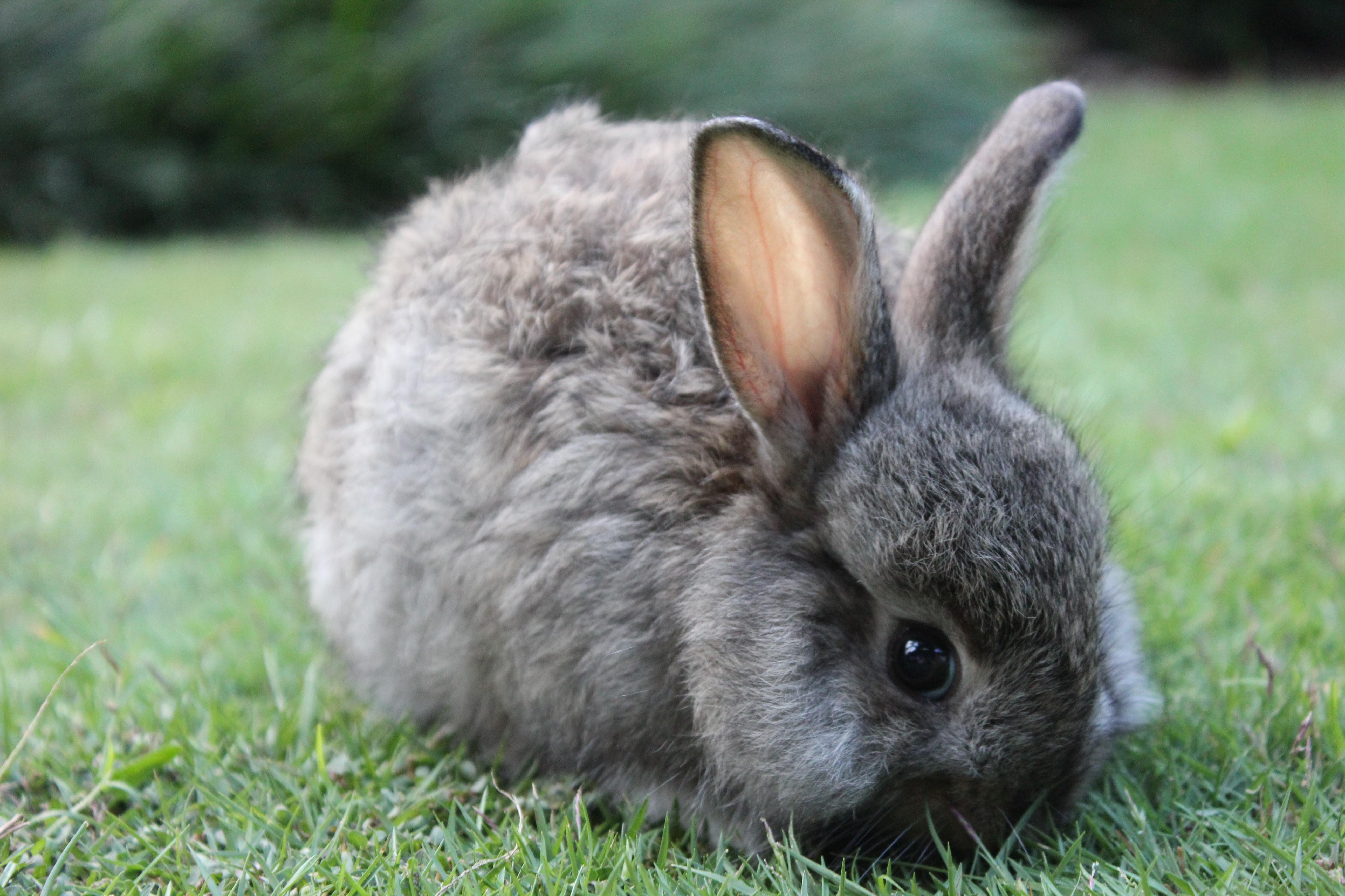 A rabbit eating grass in a garden photo