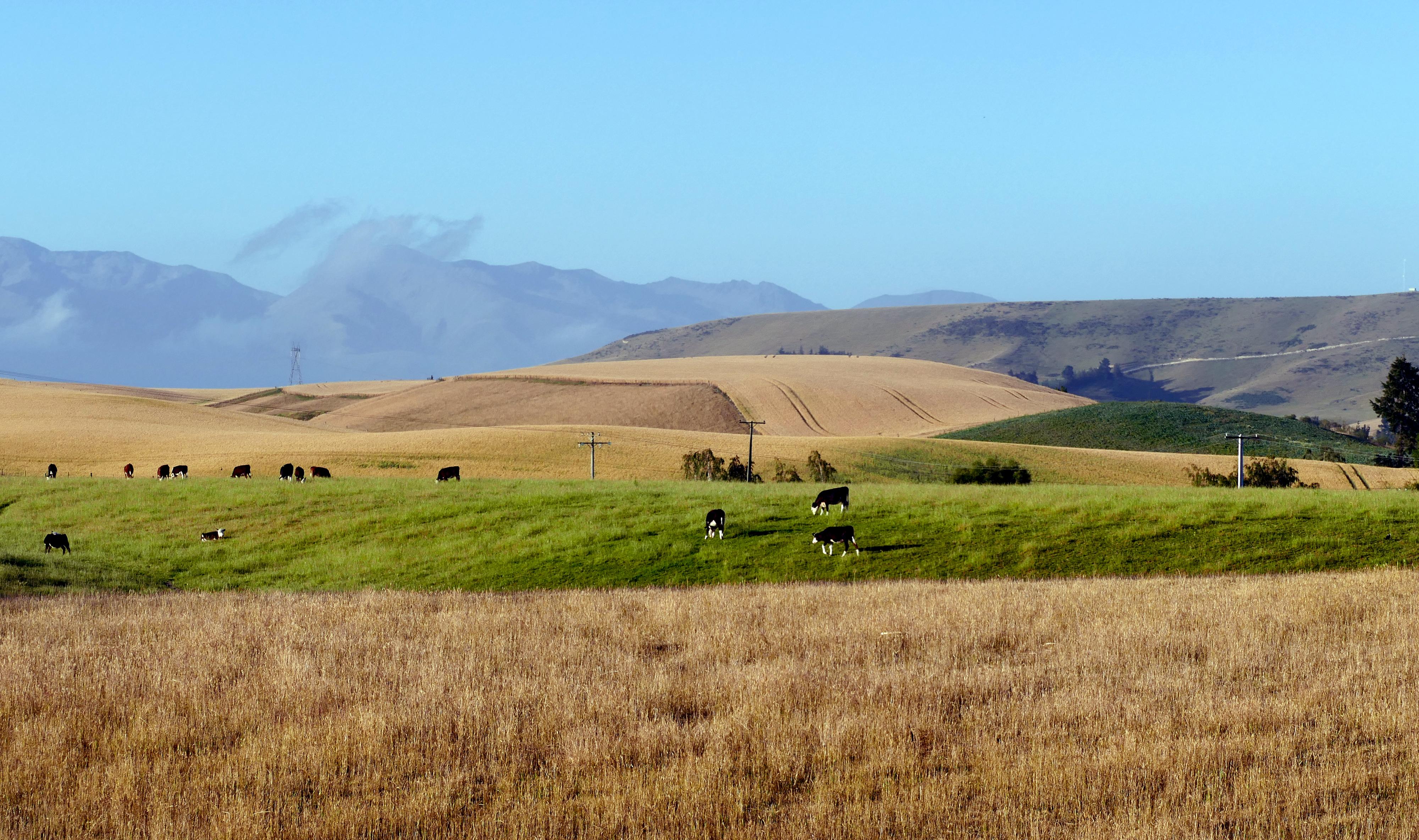 A rural setting. fairlie. nz photo