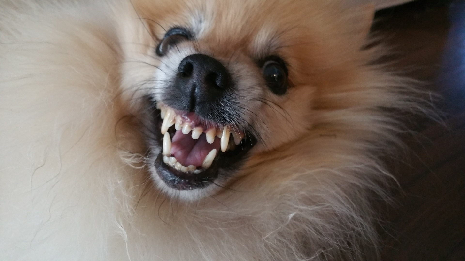 Why Small Dogs Are More Aggressive | Small Dog Place