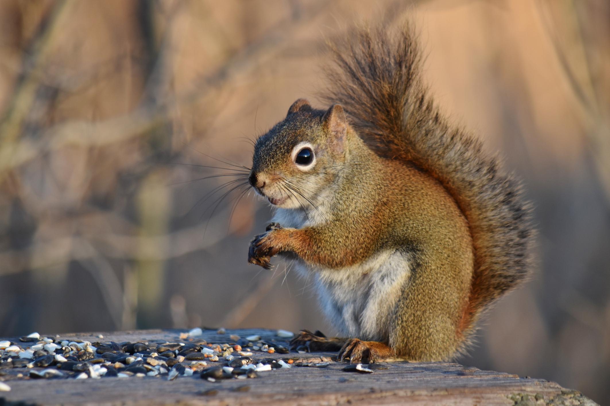 A squirrel photo