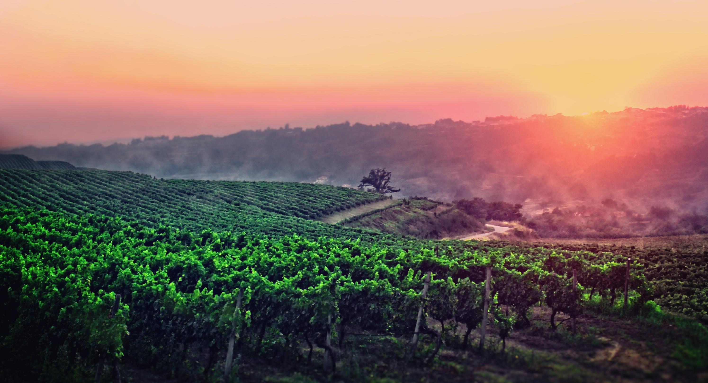 A Vineyard in Central Portugal, Outdoors, Scenics, Scenic, Scene, HQ Photo