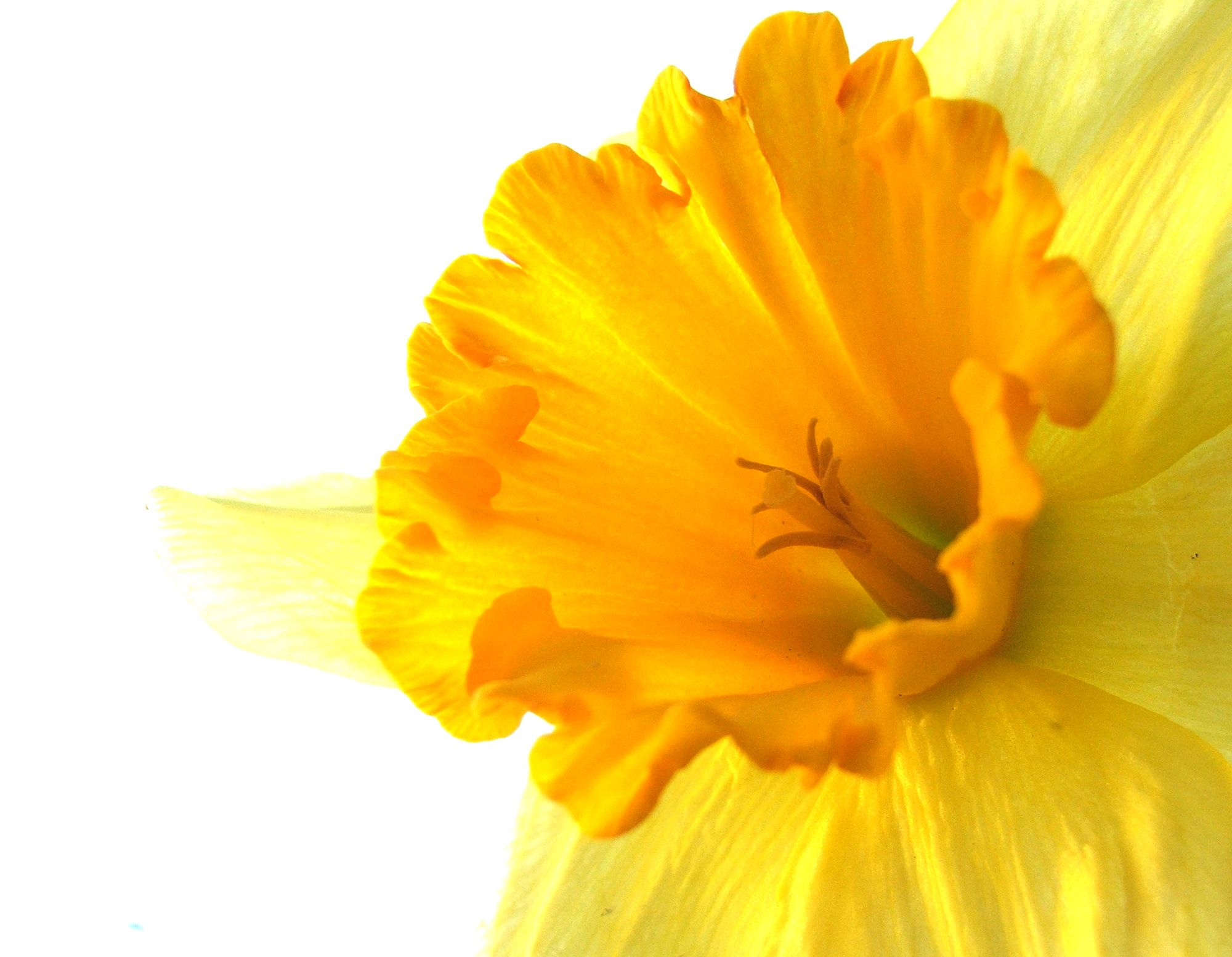 Bright yellow flower photo