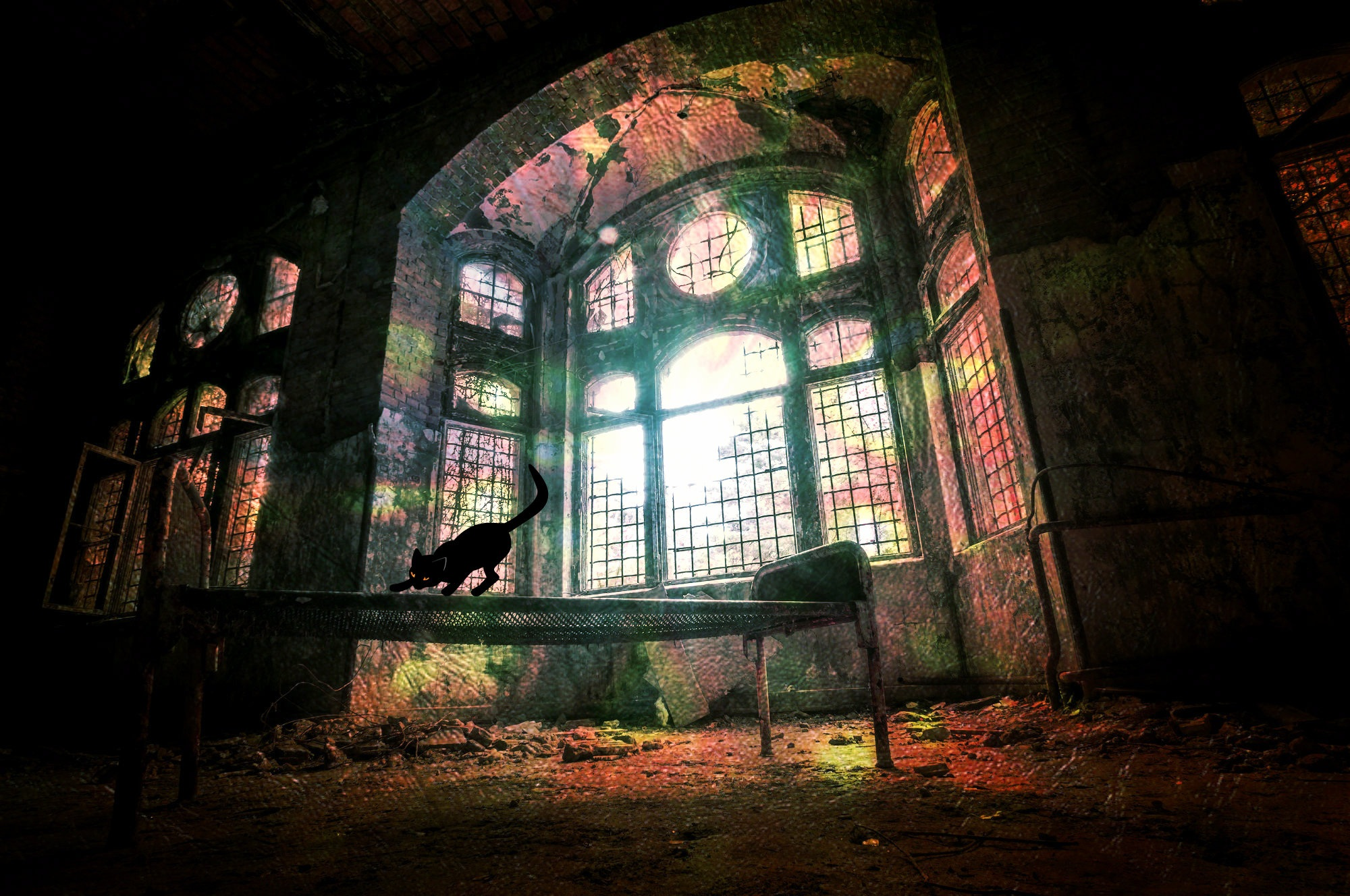 Abandoned Building, Abandoned, Architecture, Building, Cat, HQ Photo