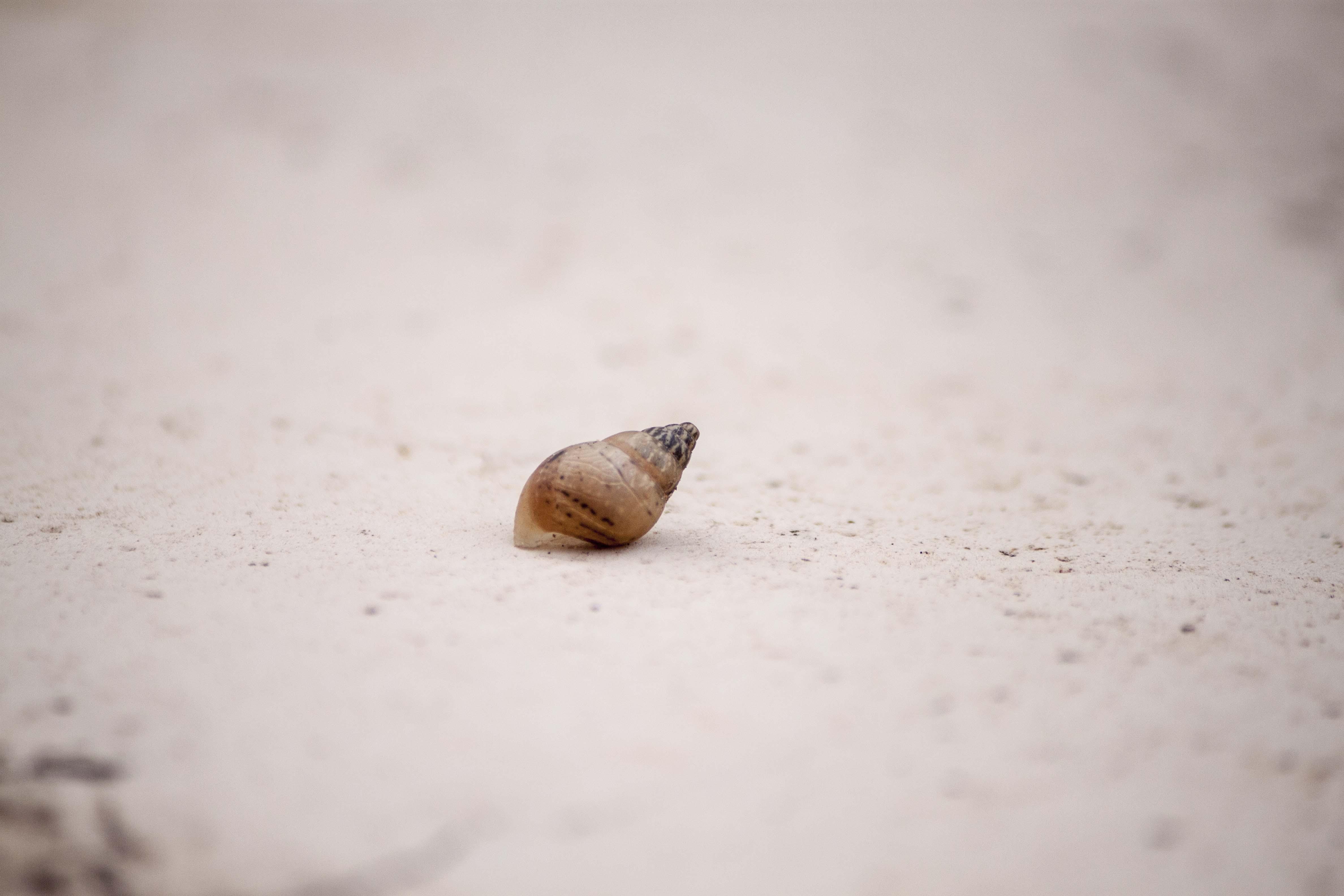 Single abandoned shell photo