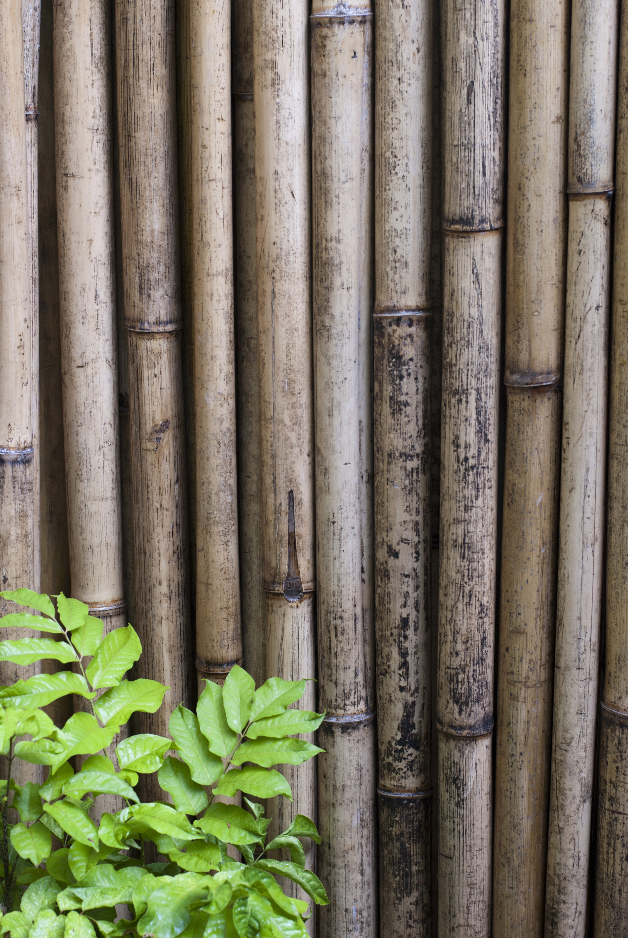 Dried bamboo fencing-5976 | Stockarch Free Stock Photos