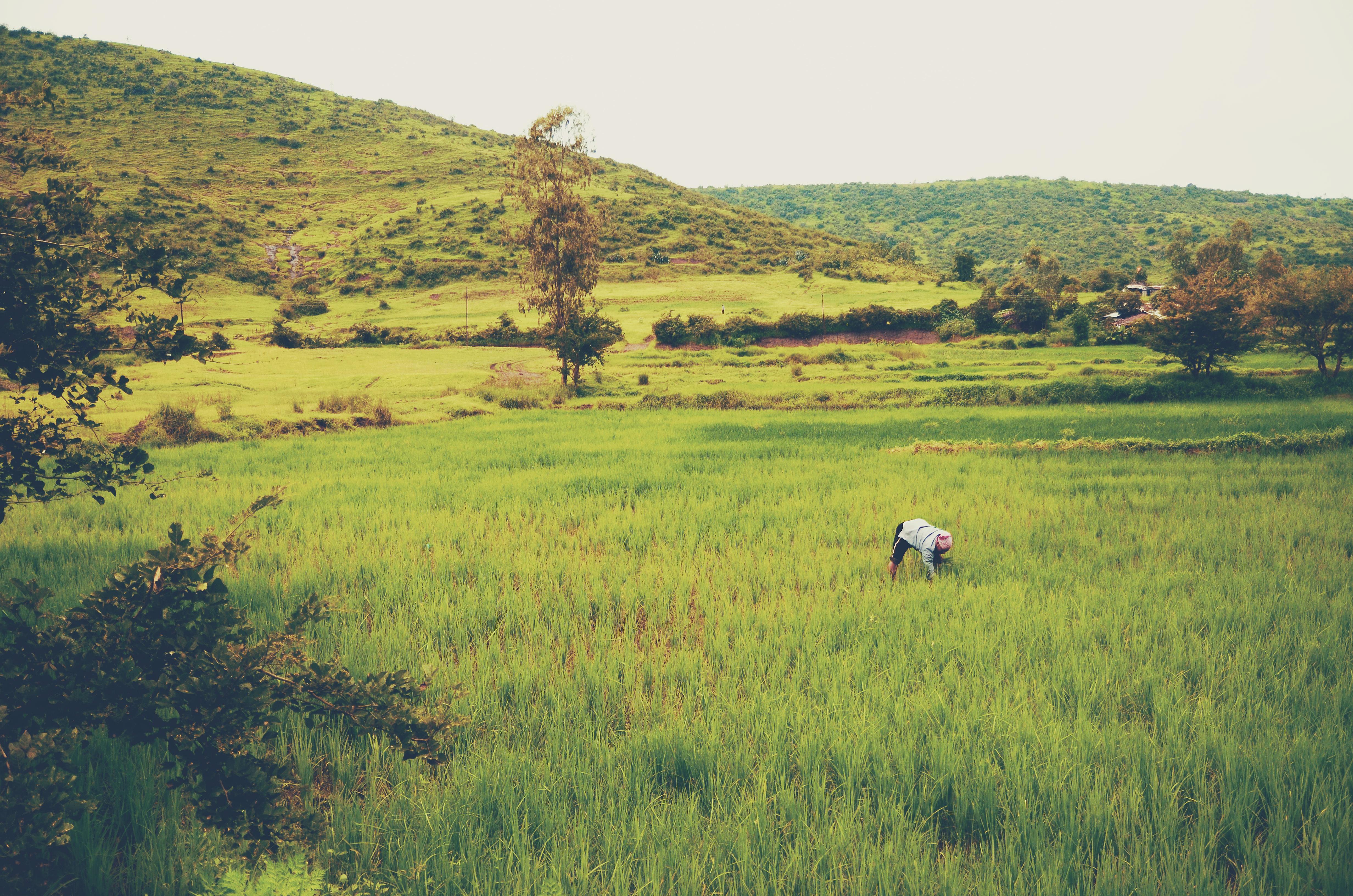 Activity, Crops, Green, Human, Land, HQ Photo