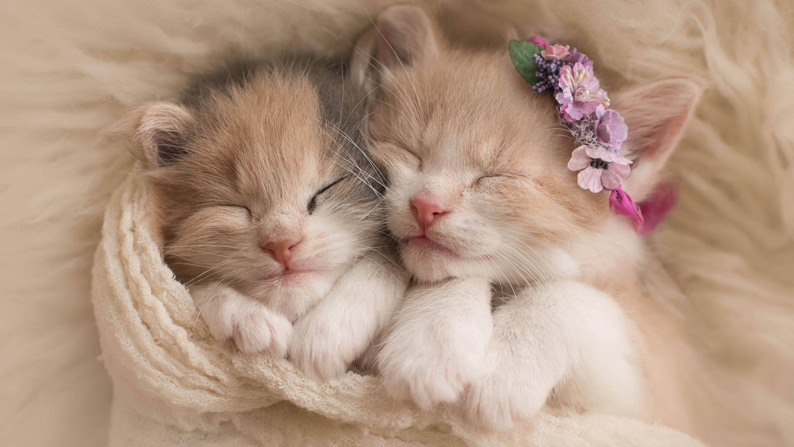 Wallpaper Cute kittens, Adorable, HD, Animals, #5655
