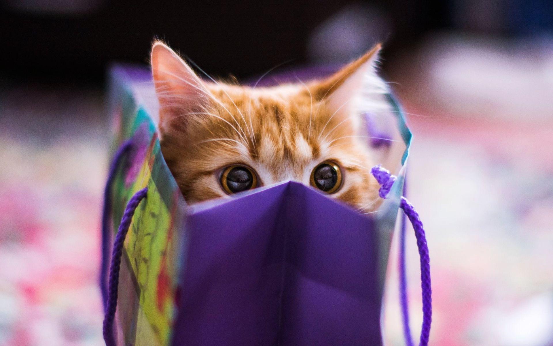 Download Adorable Cat Close Up Wallpaper 39680 1920x1200 px High ...