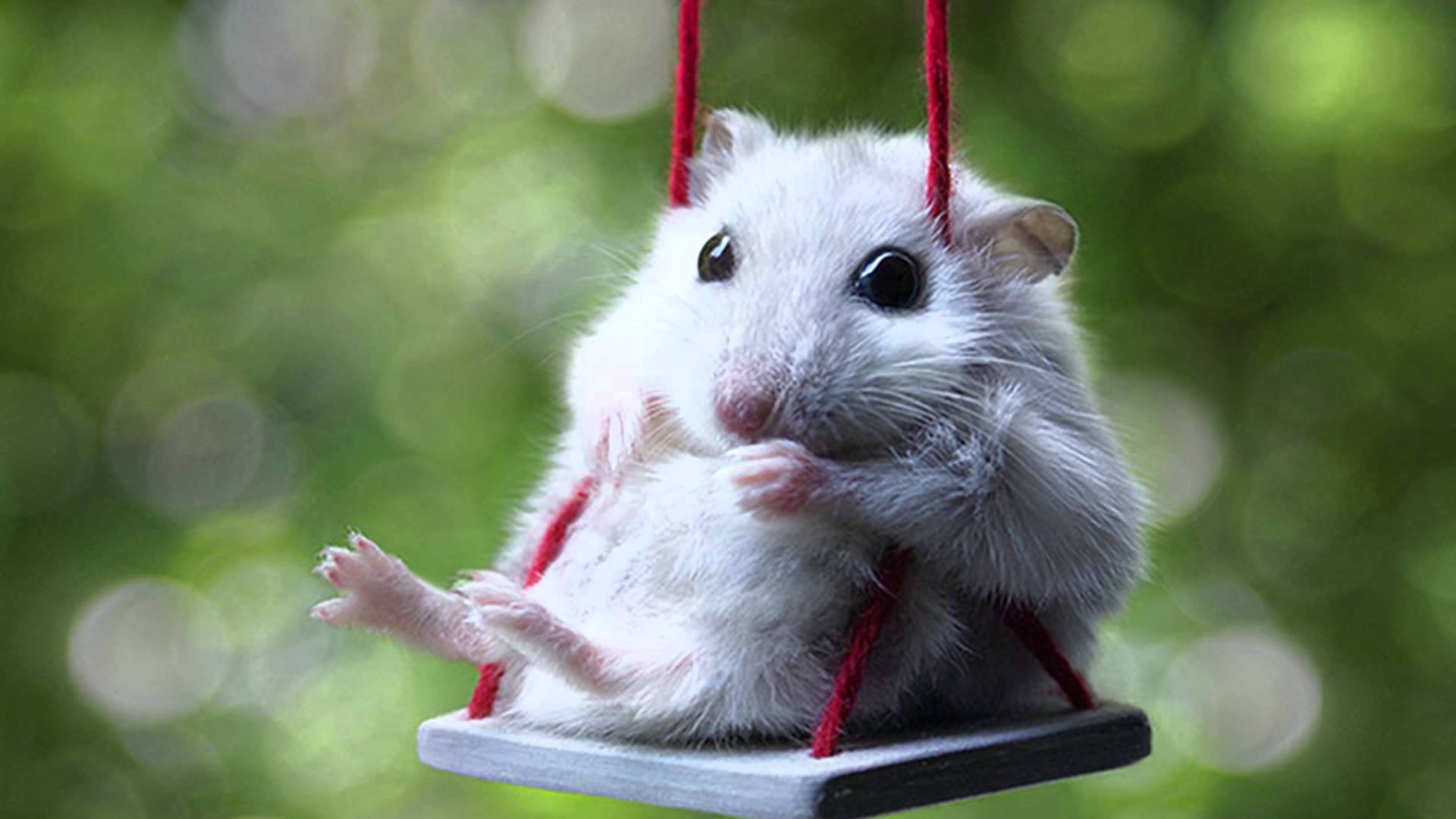 Adorable Hamsters That Will Cause A Cuteness Overload - YouTube