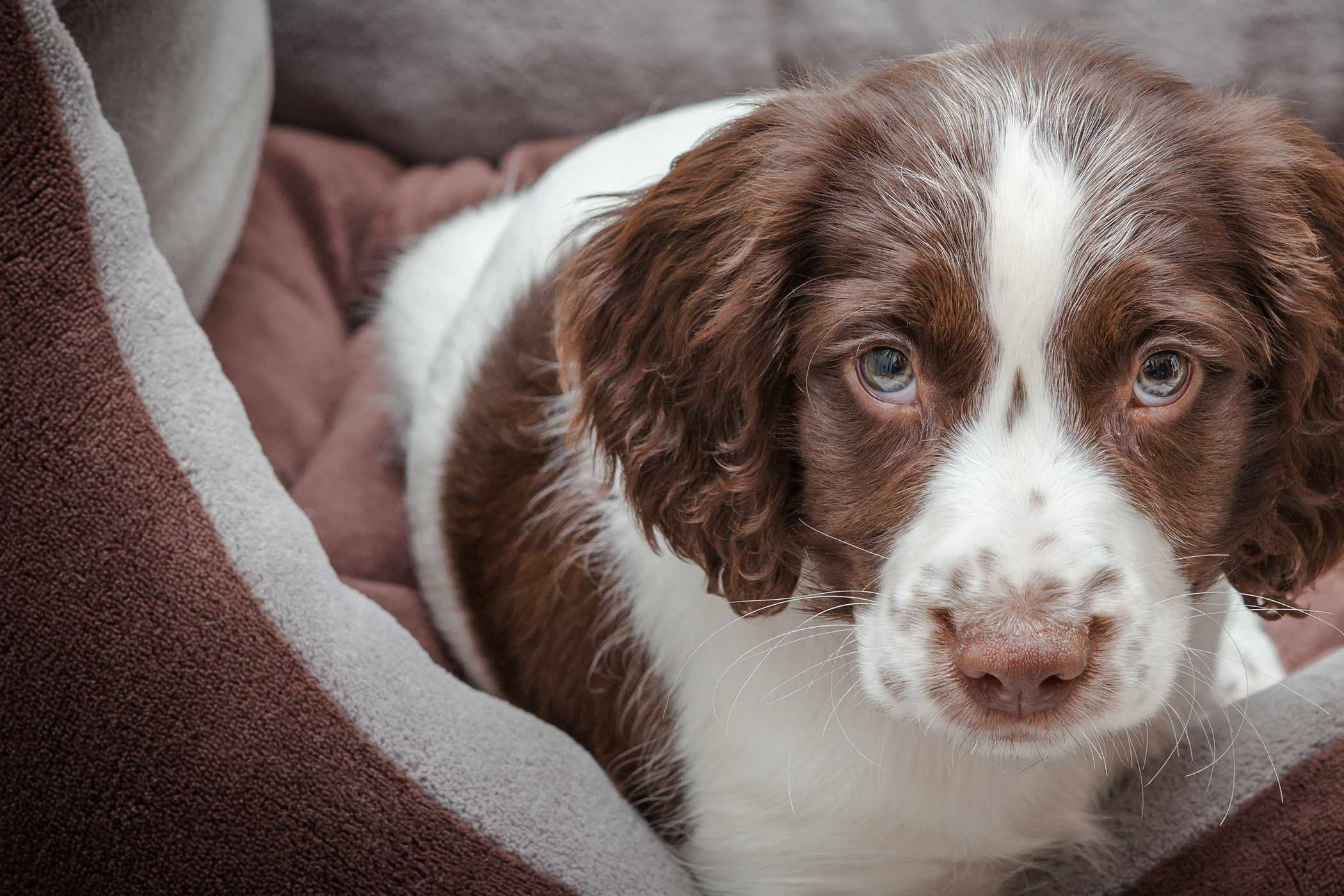 Adorable Dog Names - Wag!