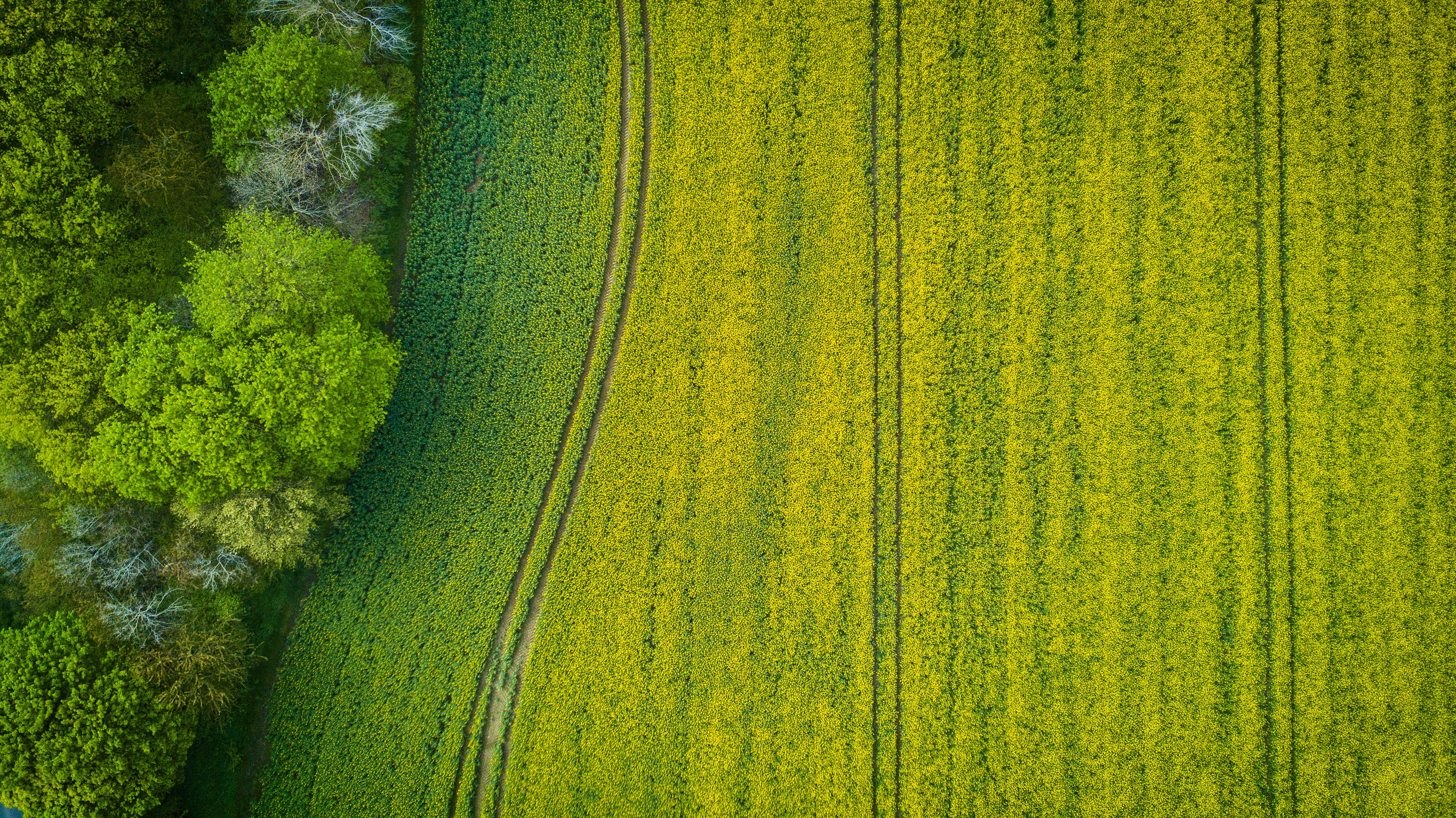 Aerial Photography of Wide Green Grass Field, Nature, Light, Green, Outdoors, HQ Photo