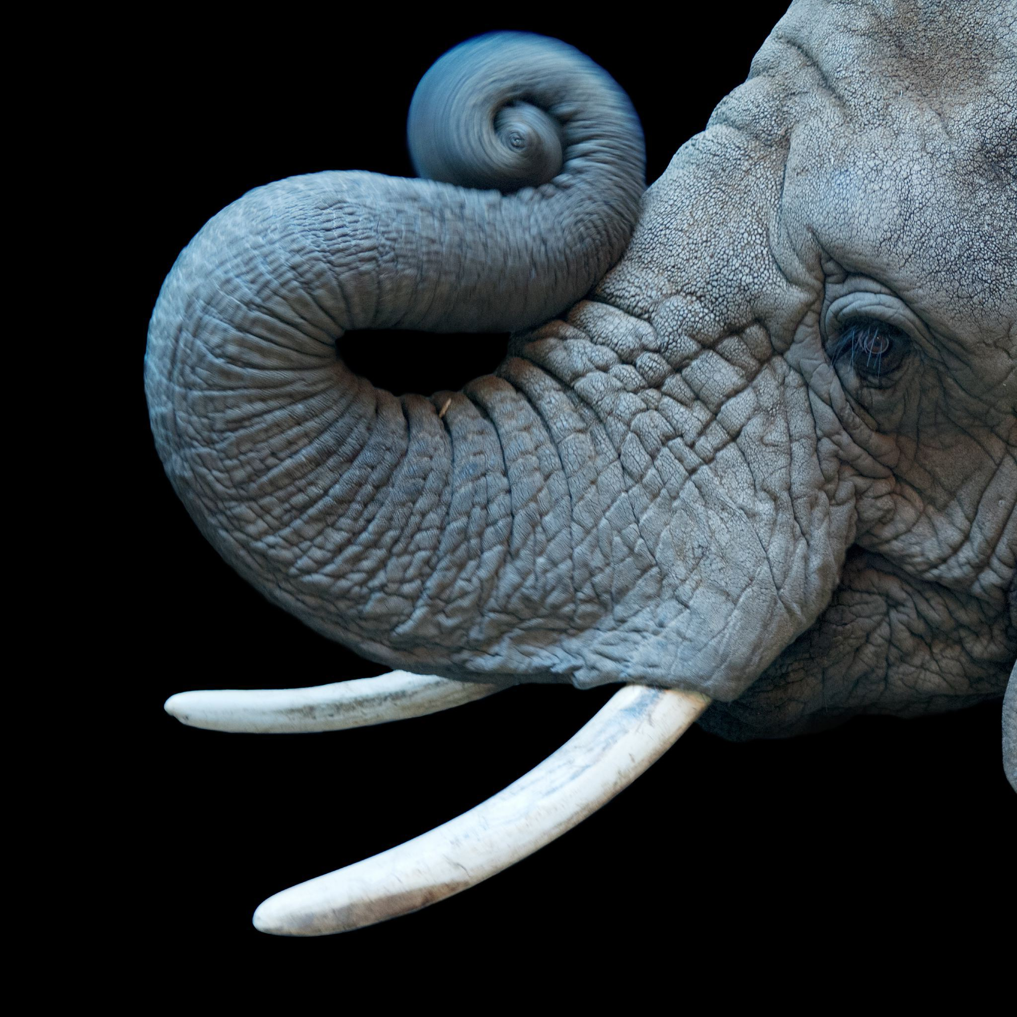 African Elephant | National Geographic