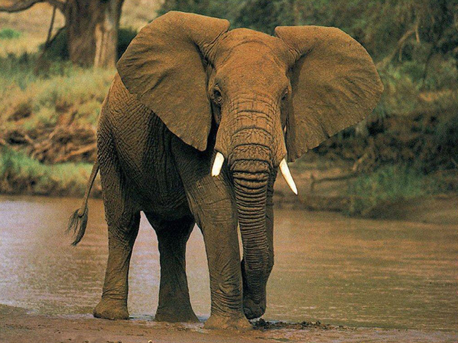 5 Interesting Facts About African Elephants | Hayden's Animal Facts