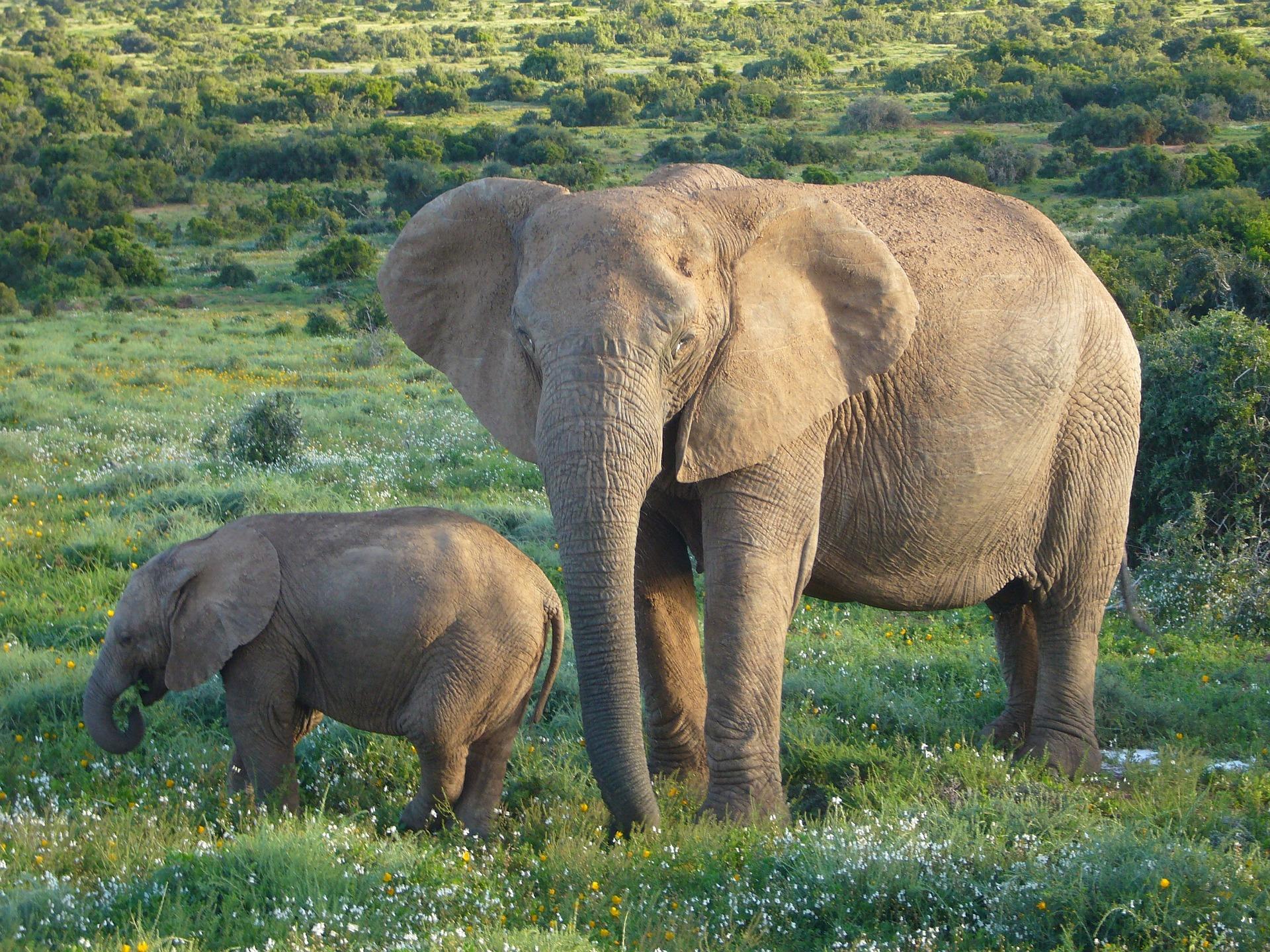 African Elephants, Nature, Wild, Giant, Elephant, HQ Photo