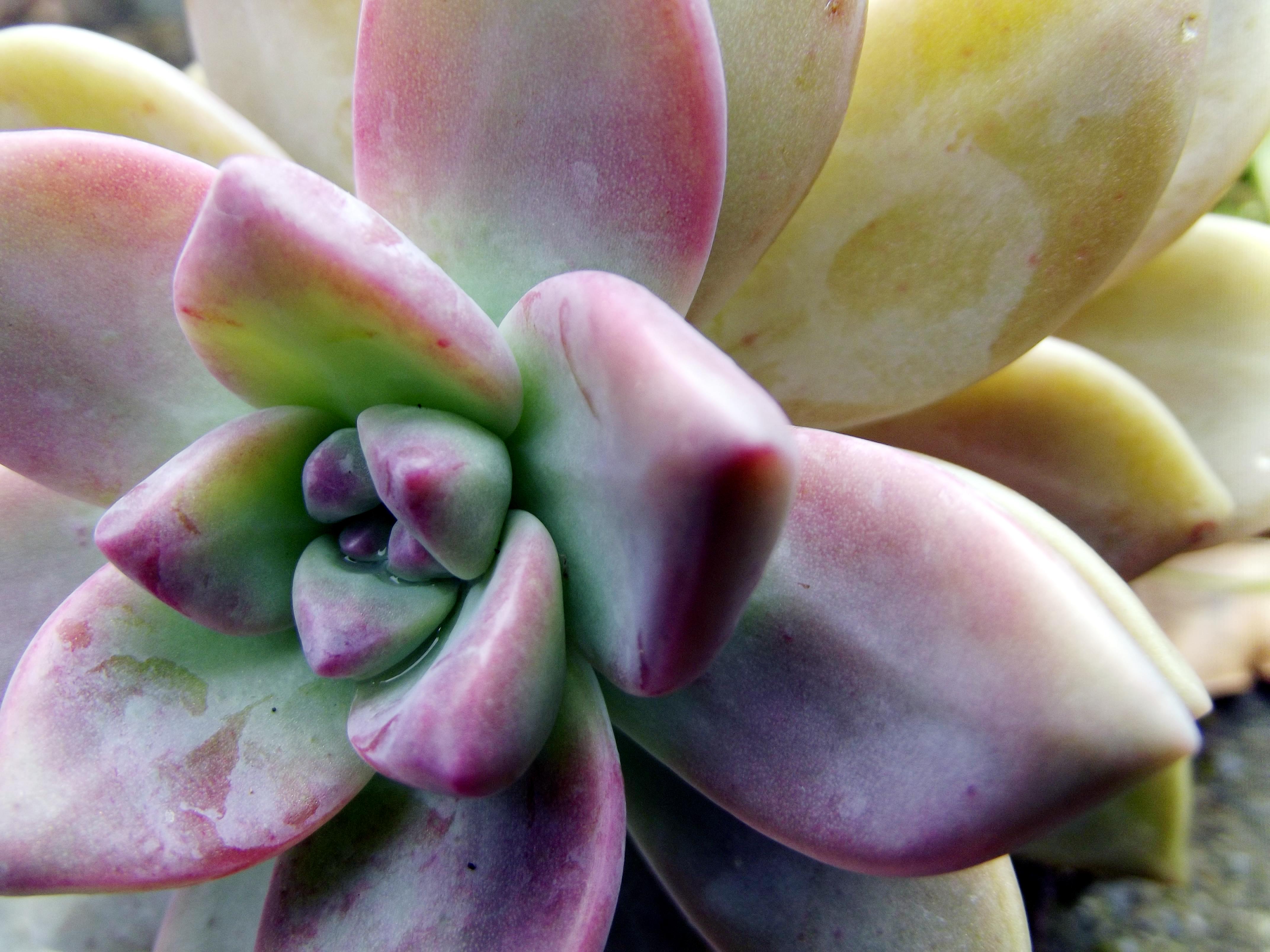 Alien Flower, Flower, Leaves, Nature, Plant, HQ Photo