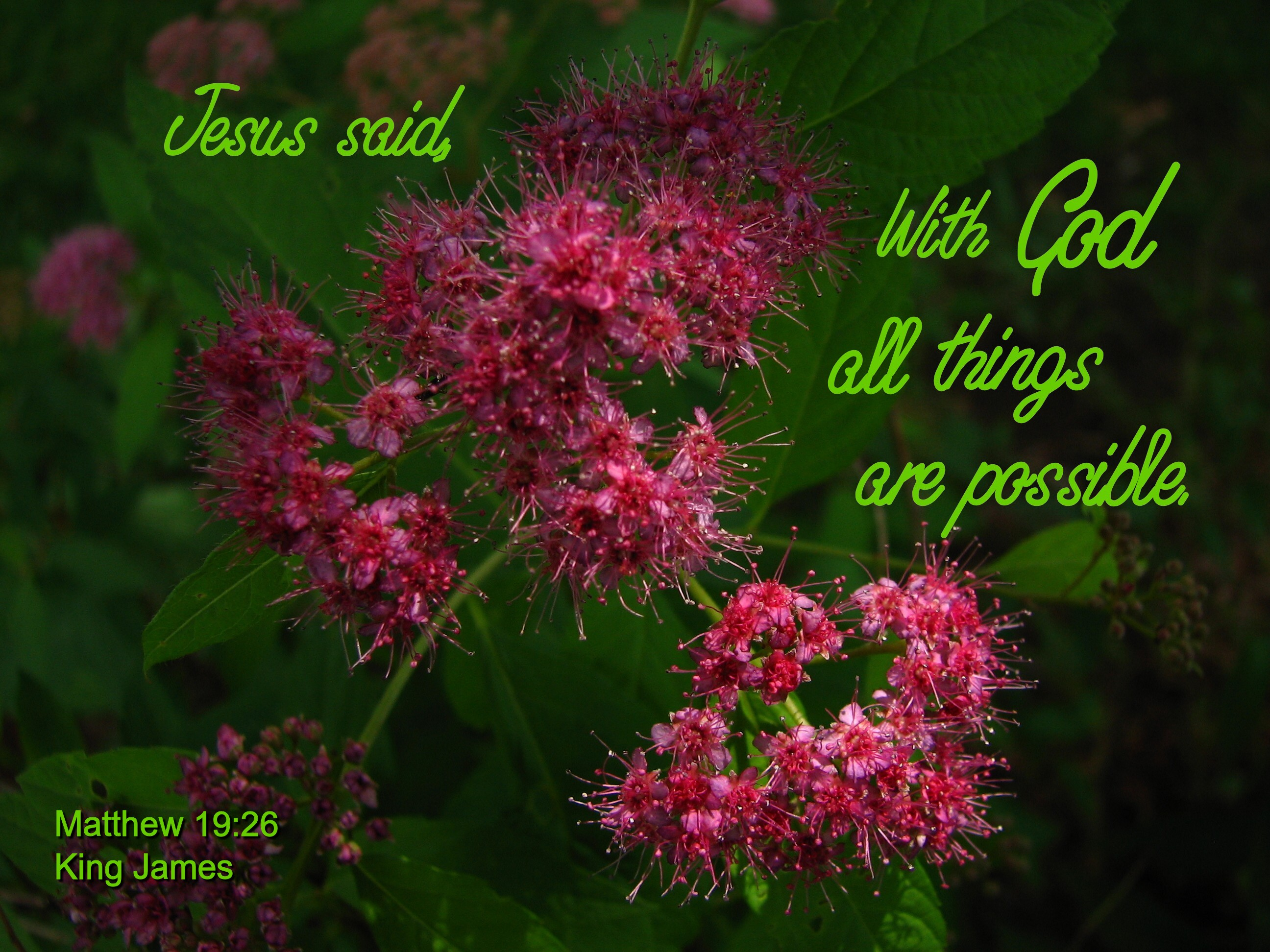 Flower bible verses kitchen cabinets and flower verses with flowers the best that it is possible to izmirmasajfo