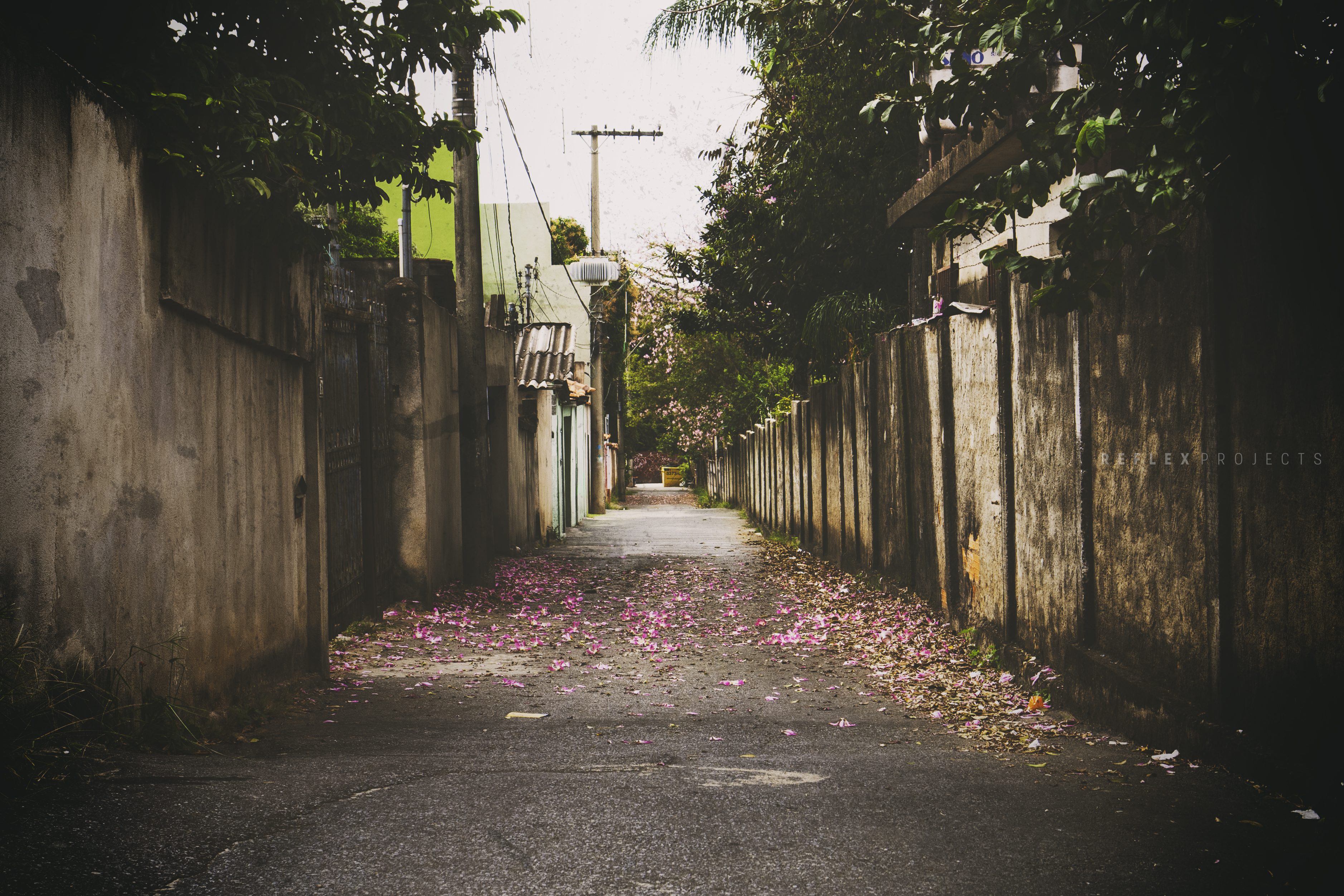 Alley photo