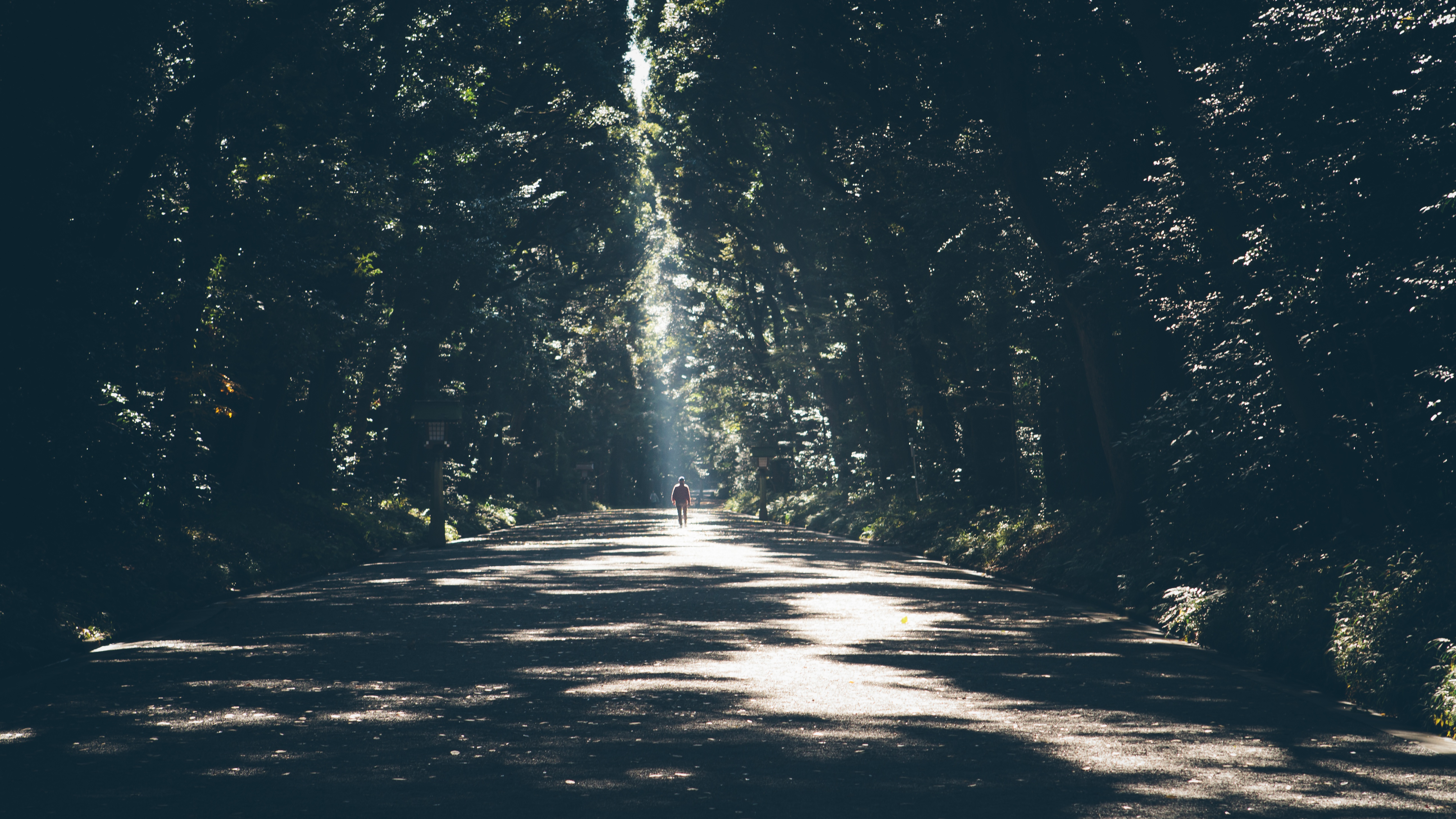 Alone, Bunch, Nature, Opaque, Shadow, HQ Photo