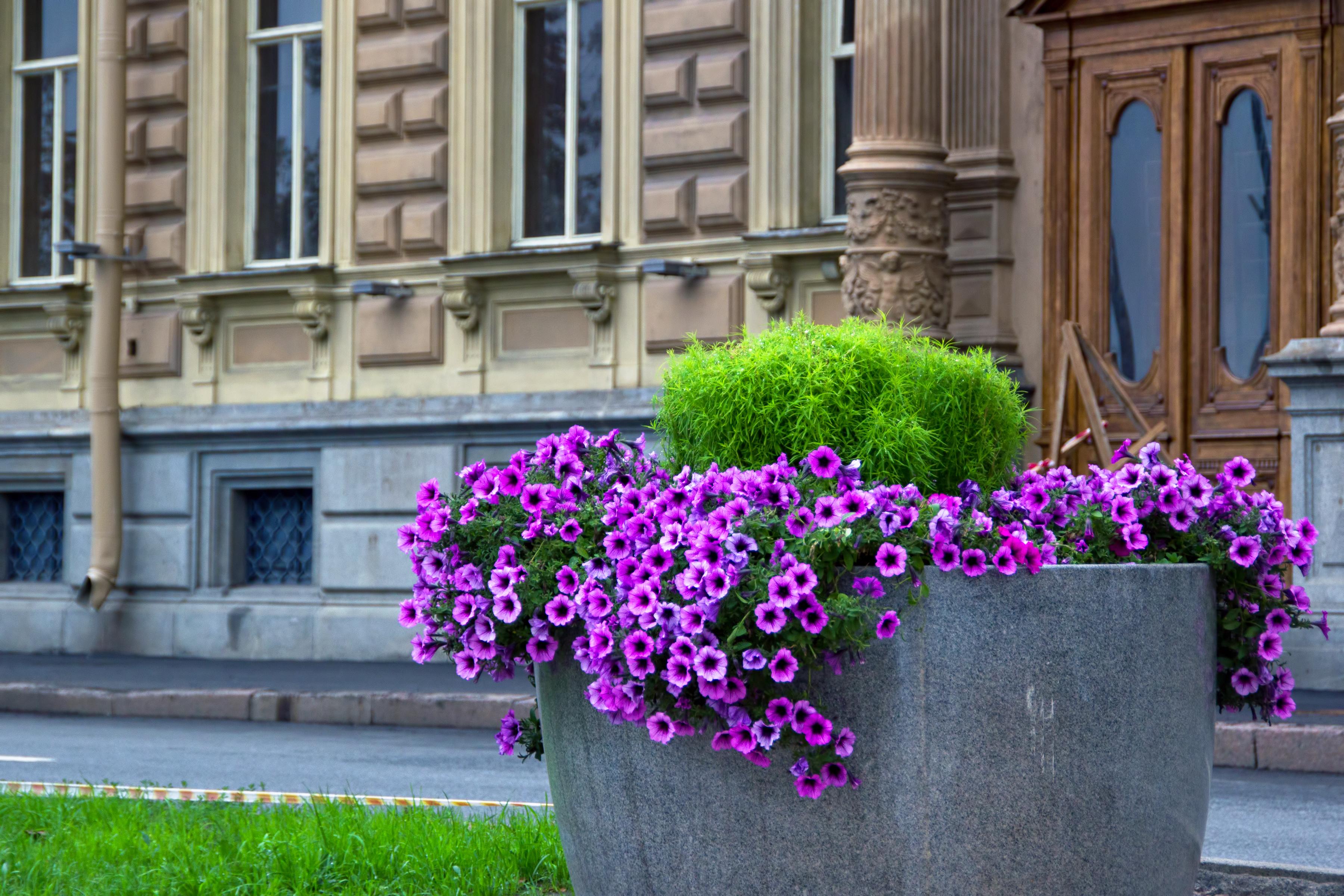 Along street in spb photo