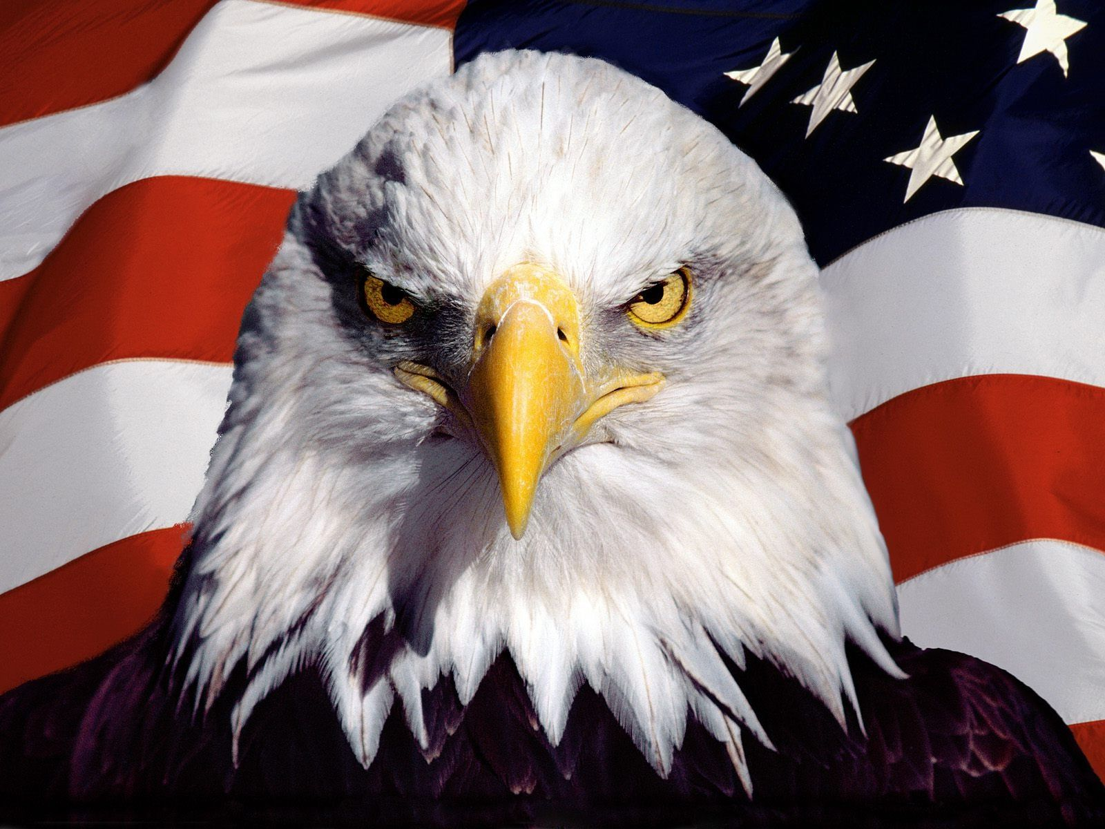 Images For > Eagle With American Flag | For America! | Pinterest ...