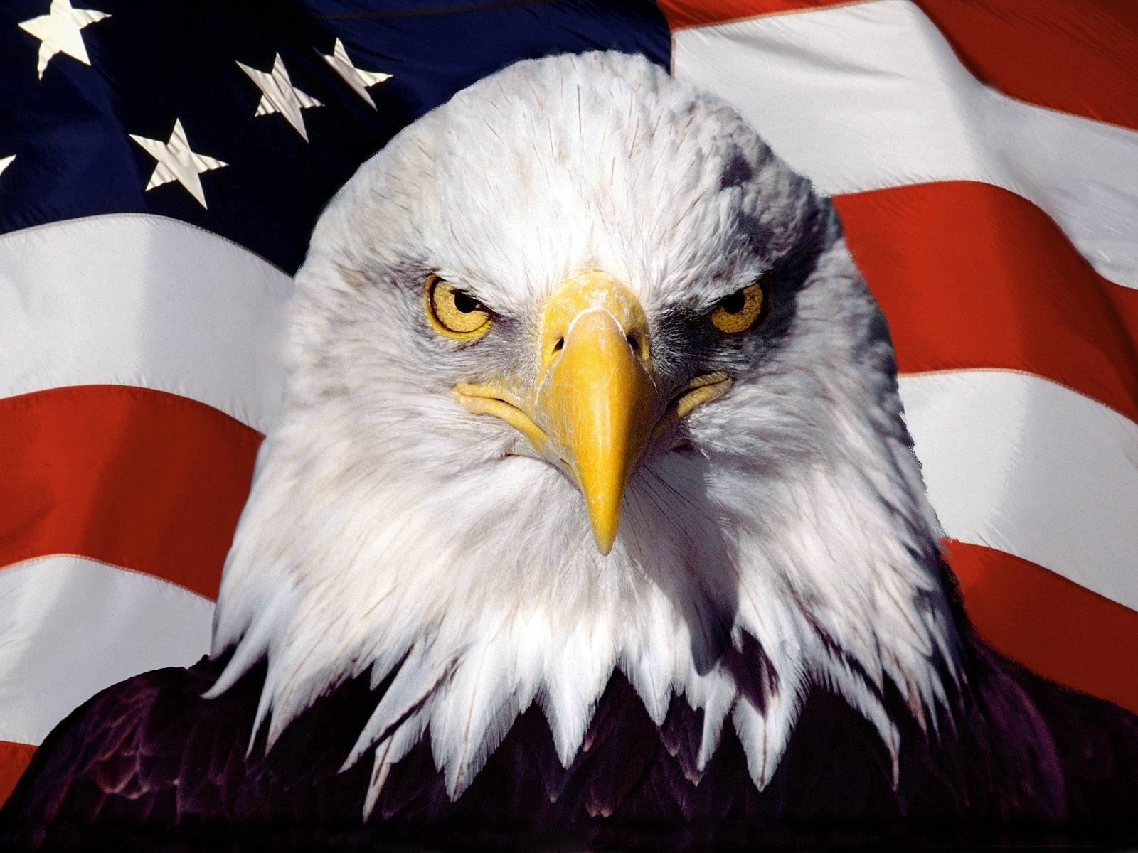 Fierce American Bald Eagle | Meme Generator