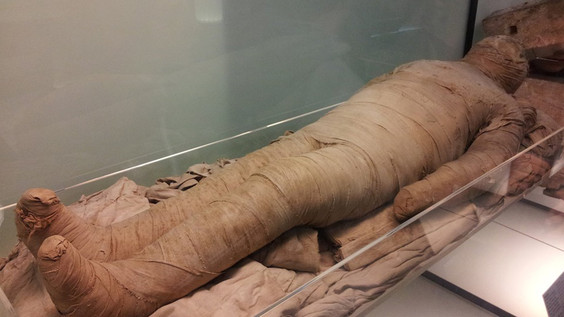 Mummies: Ancient burial chamber uncovered in Egypt; Modern pet ...